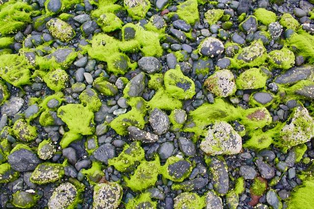 rockes on beach with neon kelp.jpeg