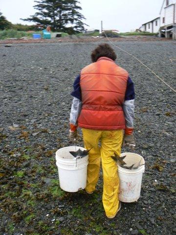 Leslie carrying 2 buckets of salmon.JPG