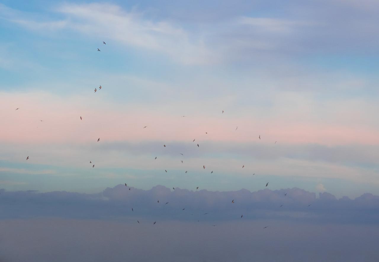 Pastel flight.