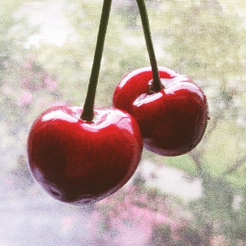 cherries_mathildegilling.jpg