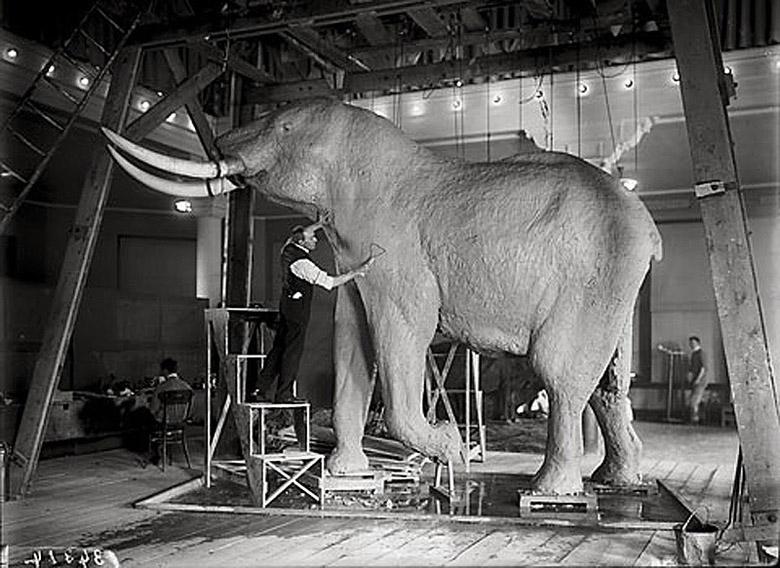 Figure 2. Carl Akeley, shotcrete used in taxidermied elephant.