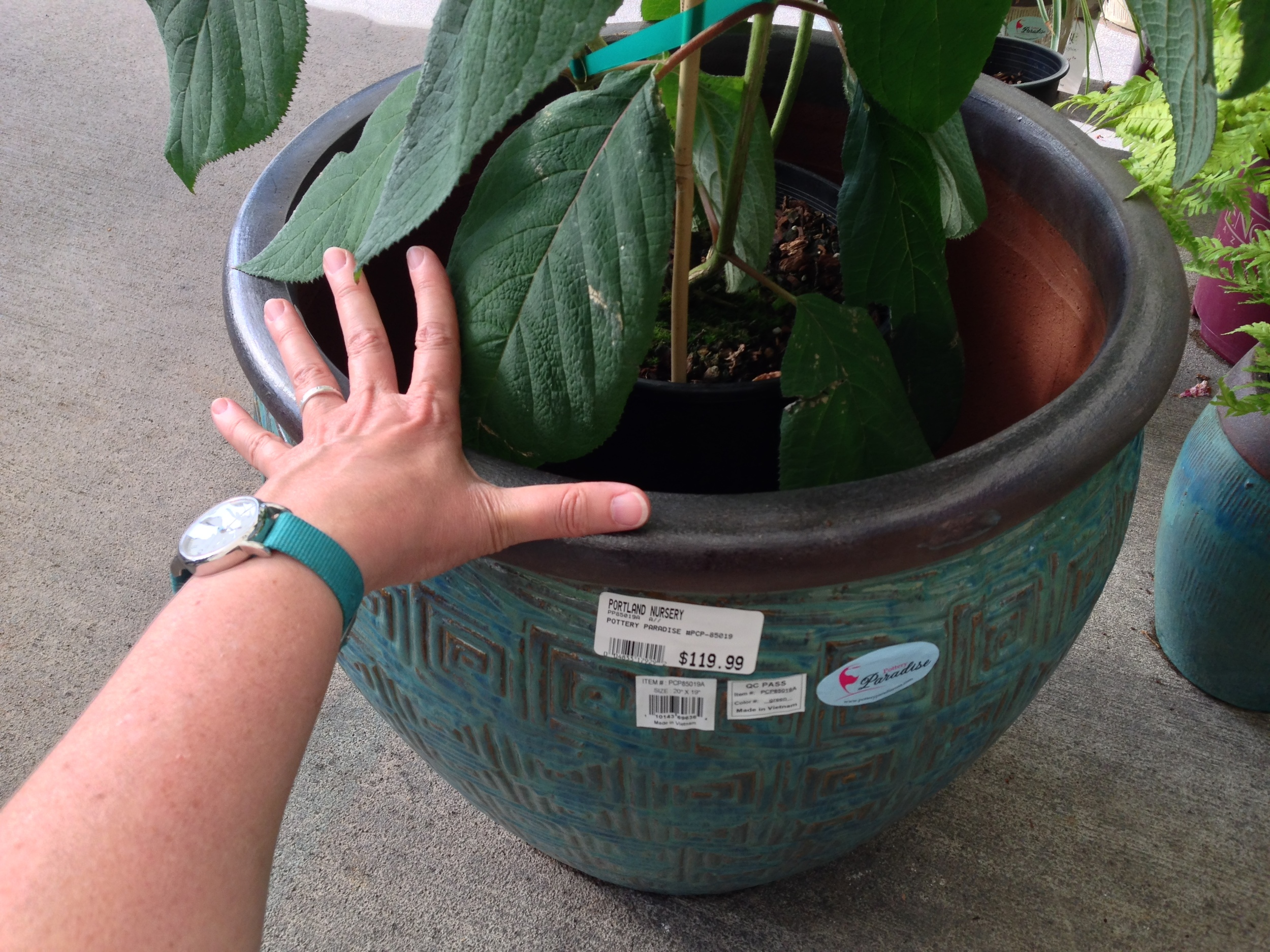 "container shopping, using photos for ""notes."" my hand spread is 8 inches, so i know this pot is 16-18"" wide.  with this photo I have a record of the price of the container, all its colors and form, and most importantly, its size."