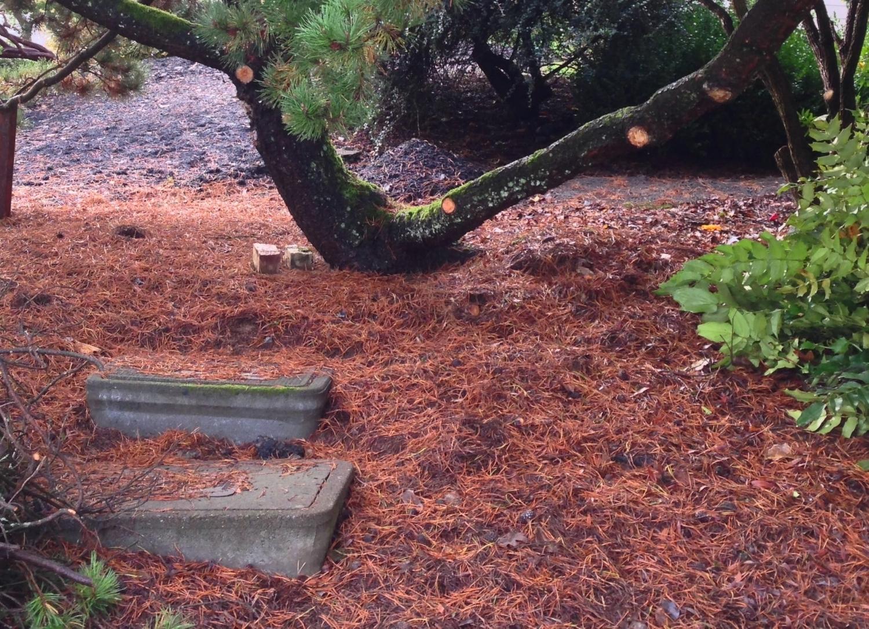 Pine needles make the softest woodland floor.