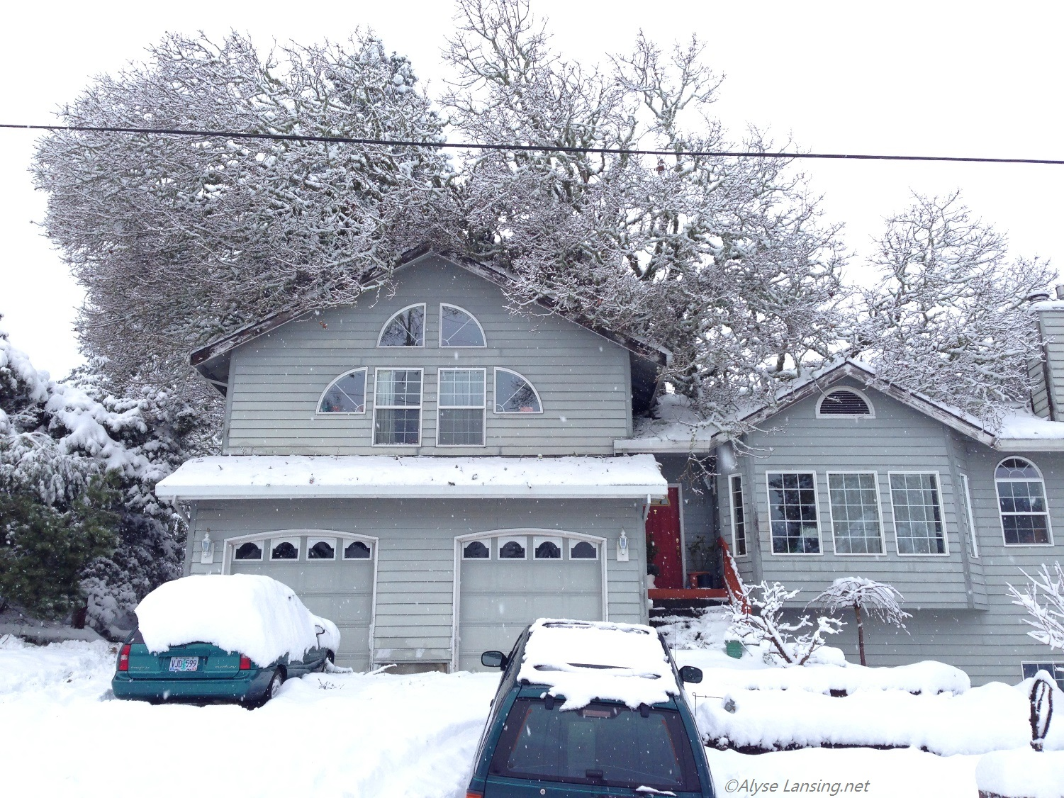 January 11, 2017.  Front view, tree looking like it is trying to eat the house.