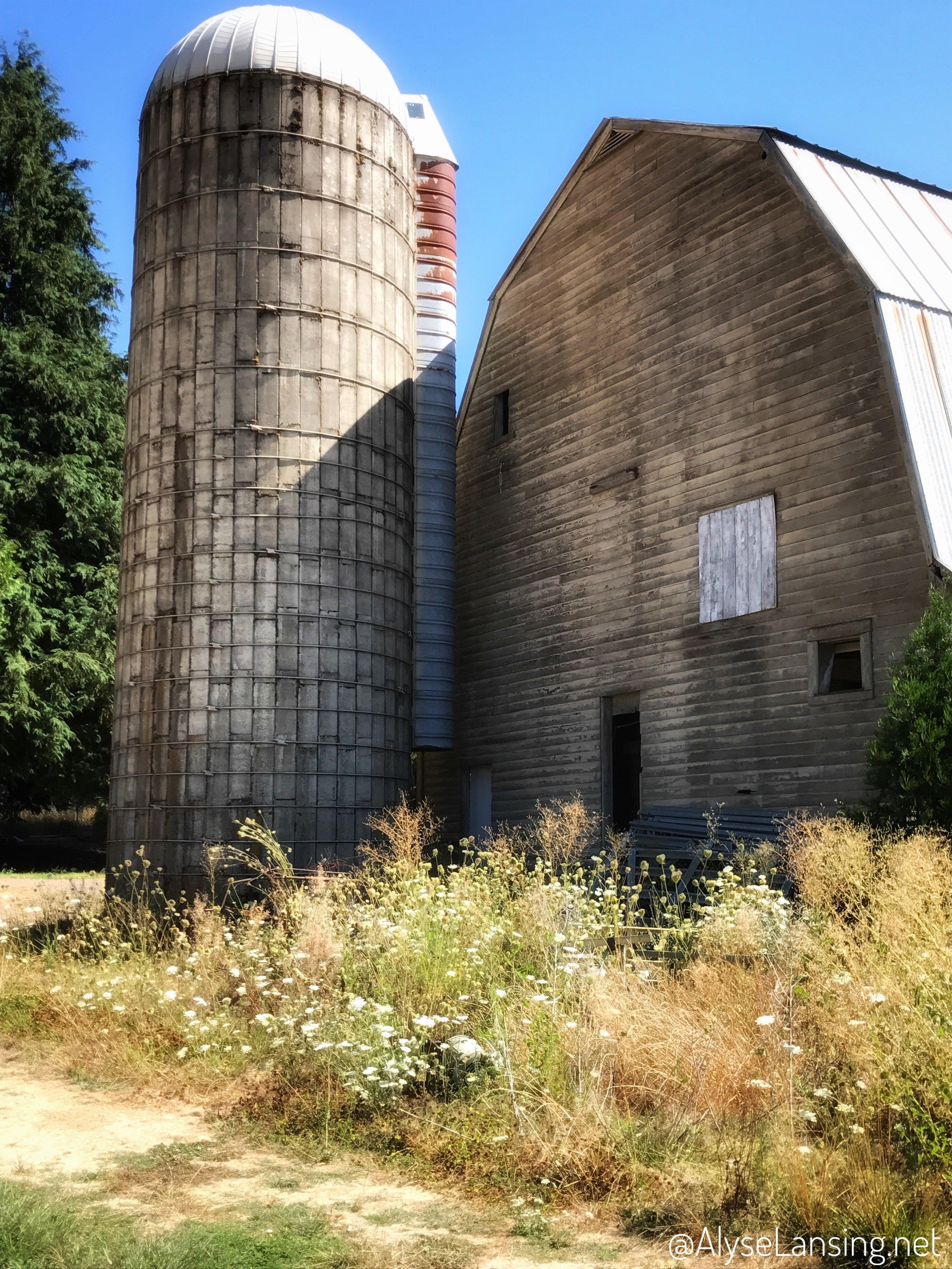 beautiful_weeds_AlyseLansing2017_7_Barn