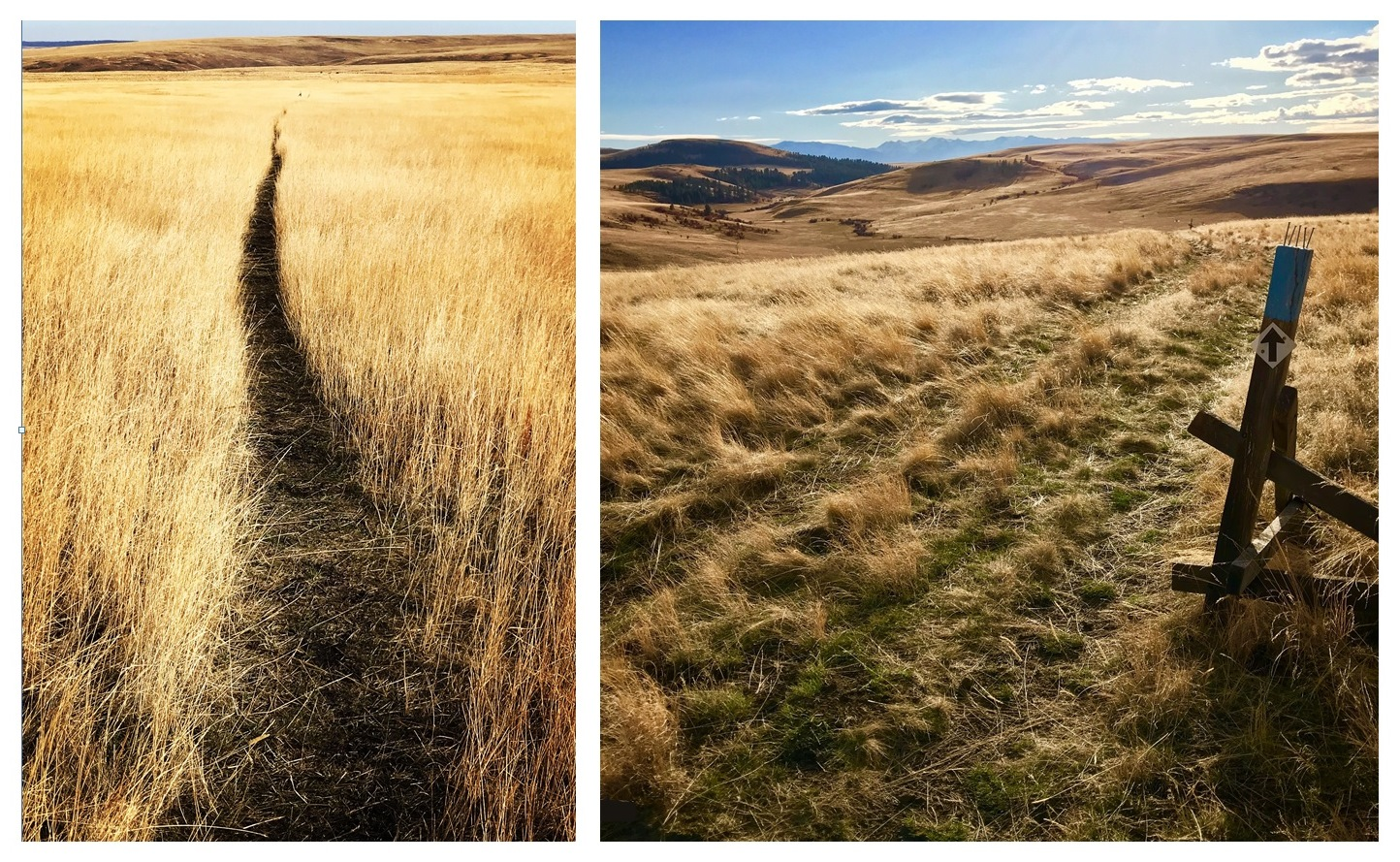 Zumwalt Prairie Preserve.  Left: Patti's Trail. Right: Horned Lark Trail.