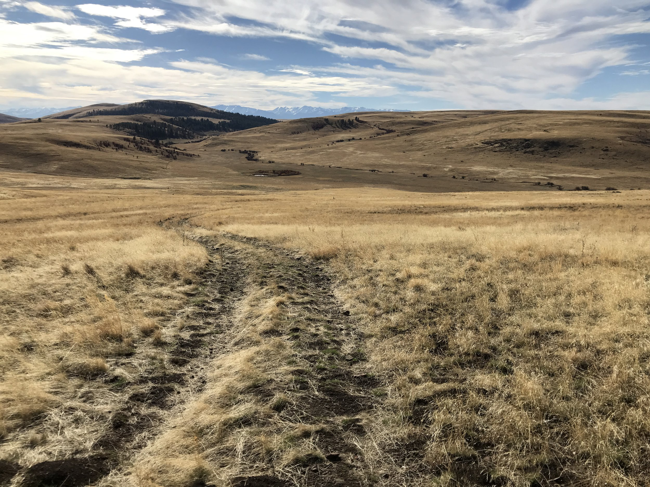 AlyseLansing_Horned_Lark_Trail_1
