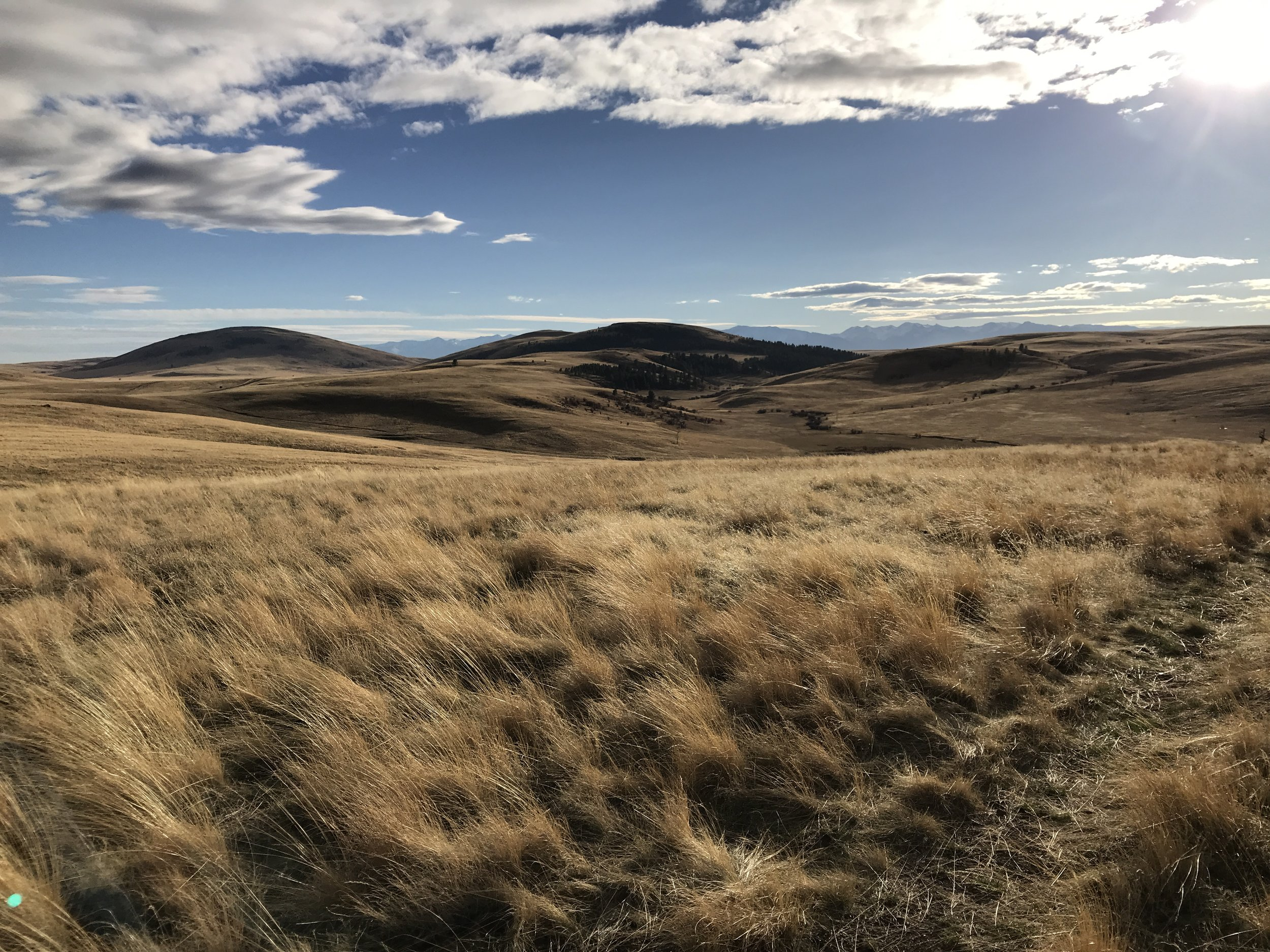 Two of the Findley Buttes that mark the Zumwalt Preserve, and the Wallowa Mountains behind them.