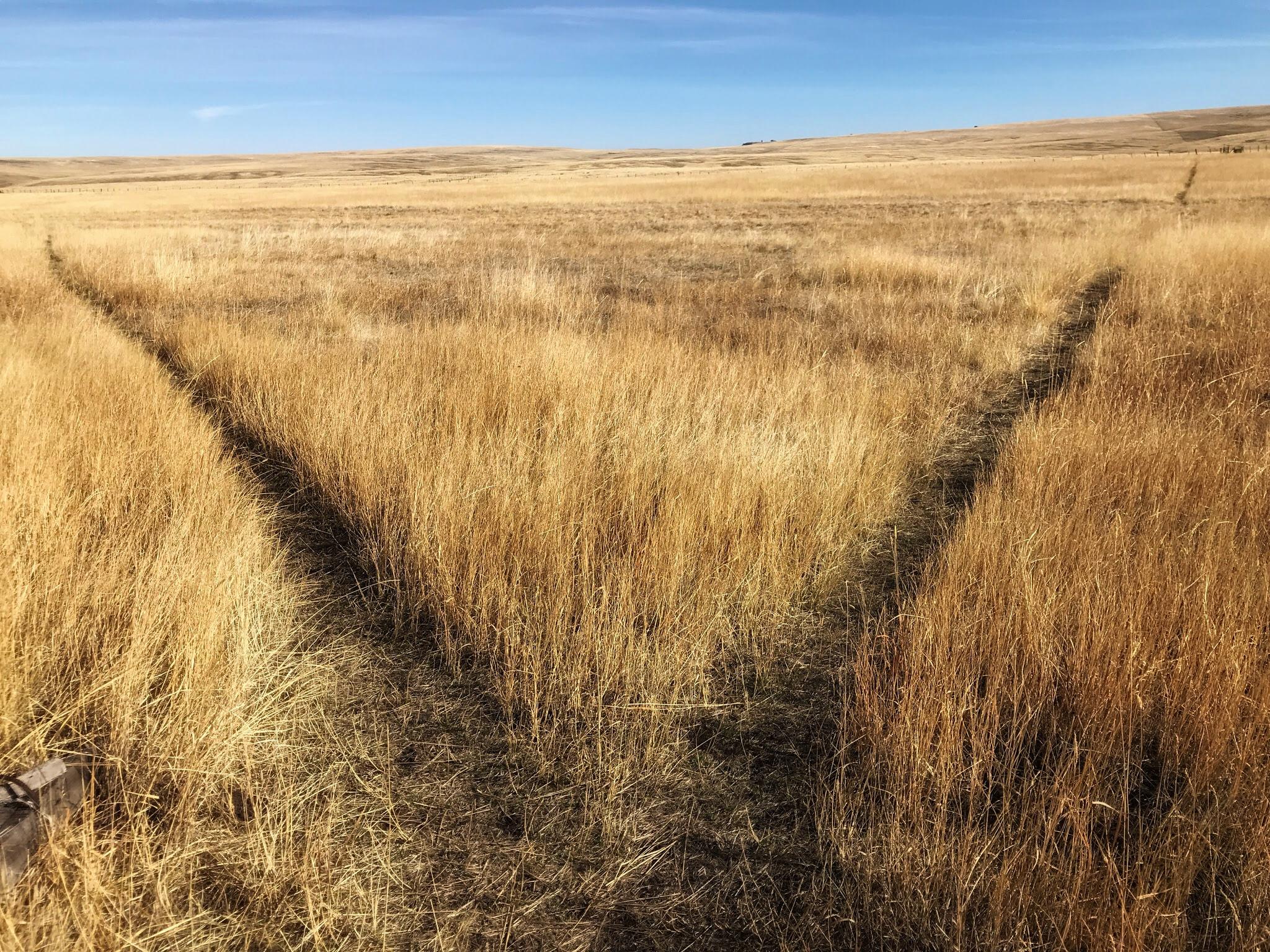 AlyseLansing_Patti's_Trail_3