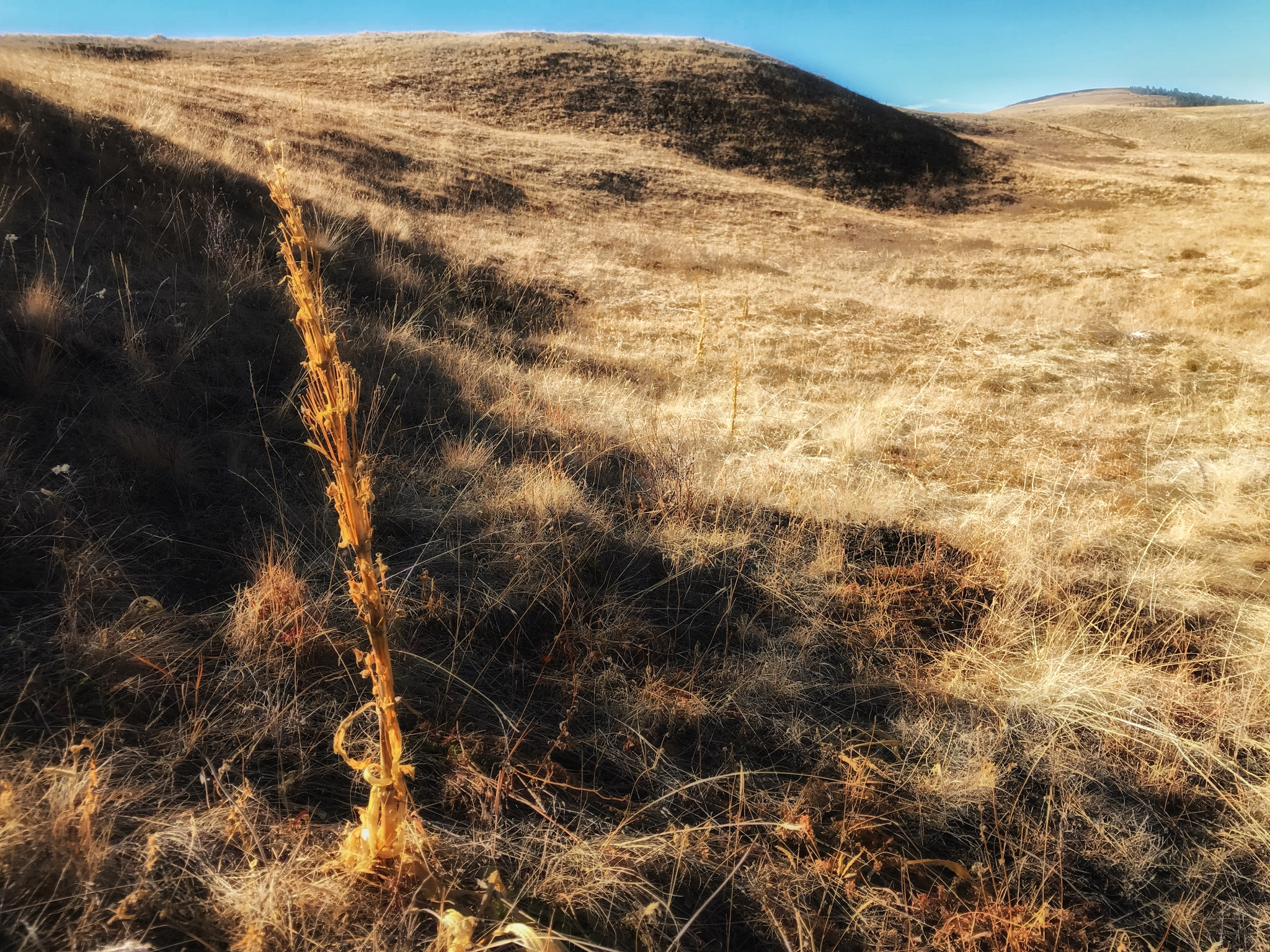 AlyseLansing_Patti's_Trail_6-