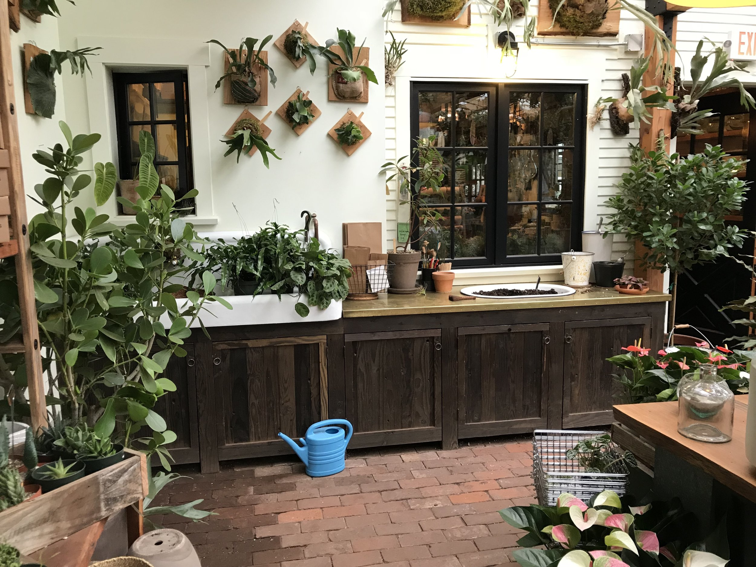 Pistils' attractive sink & potting bench area, with Staghorn Ferns