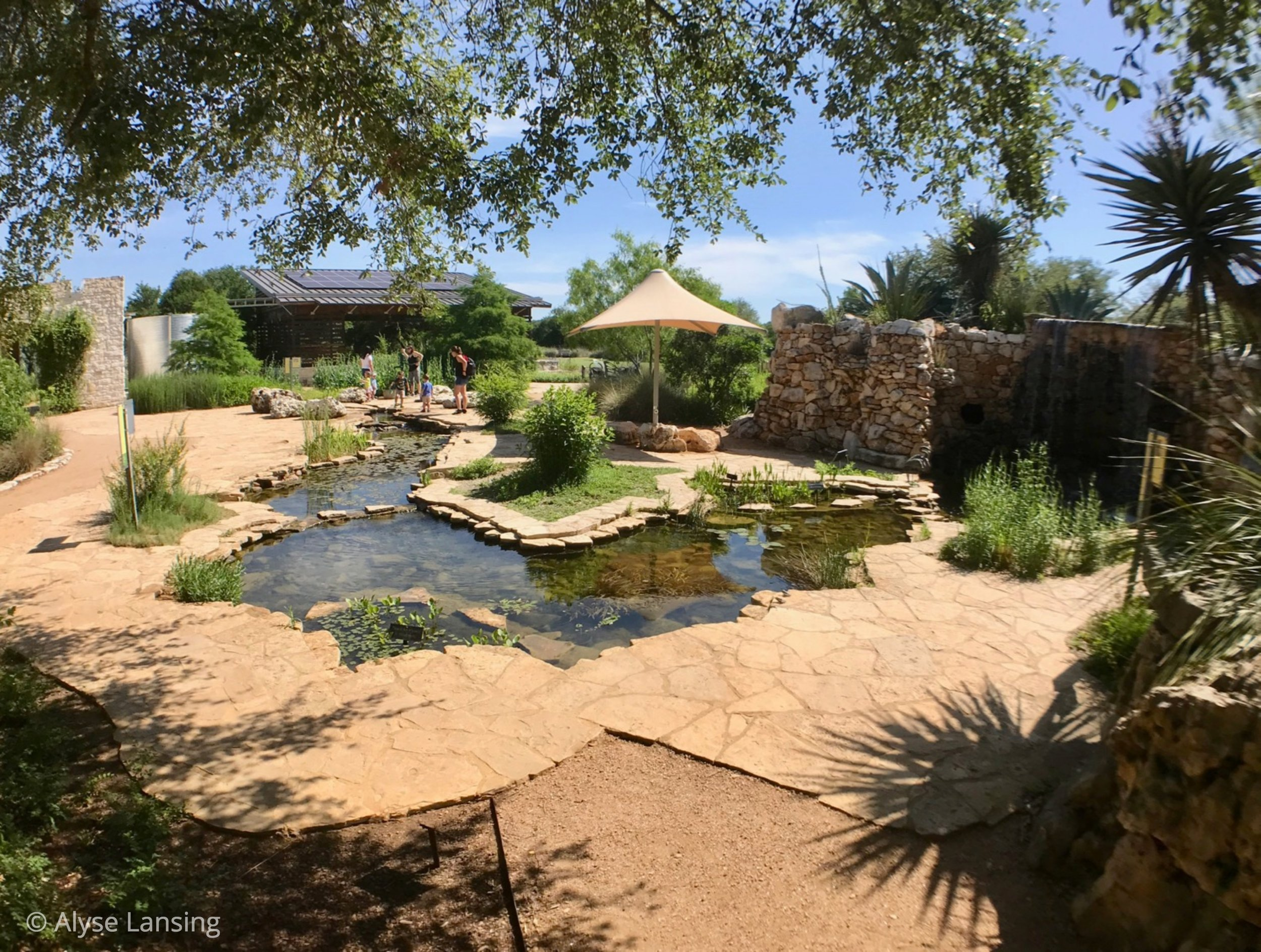 This is the Dinosaur Creek water feature, as it winds down and around from the waterfall on the right.