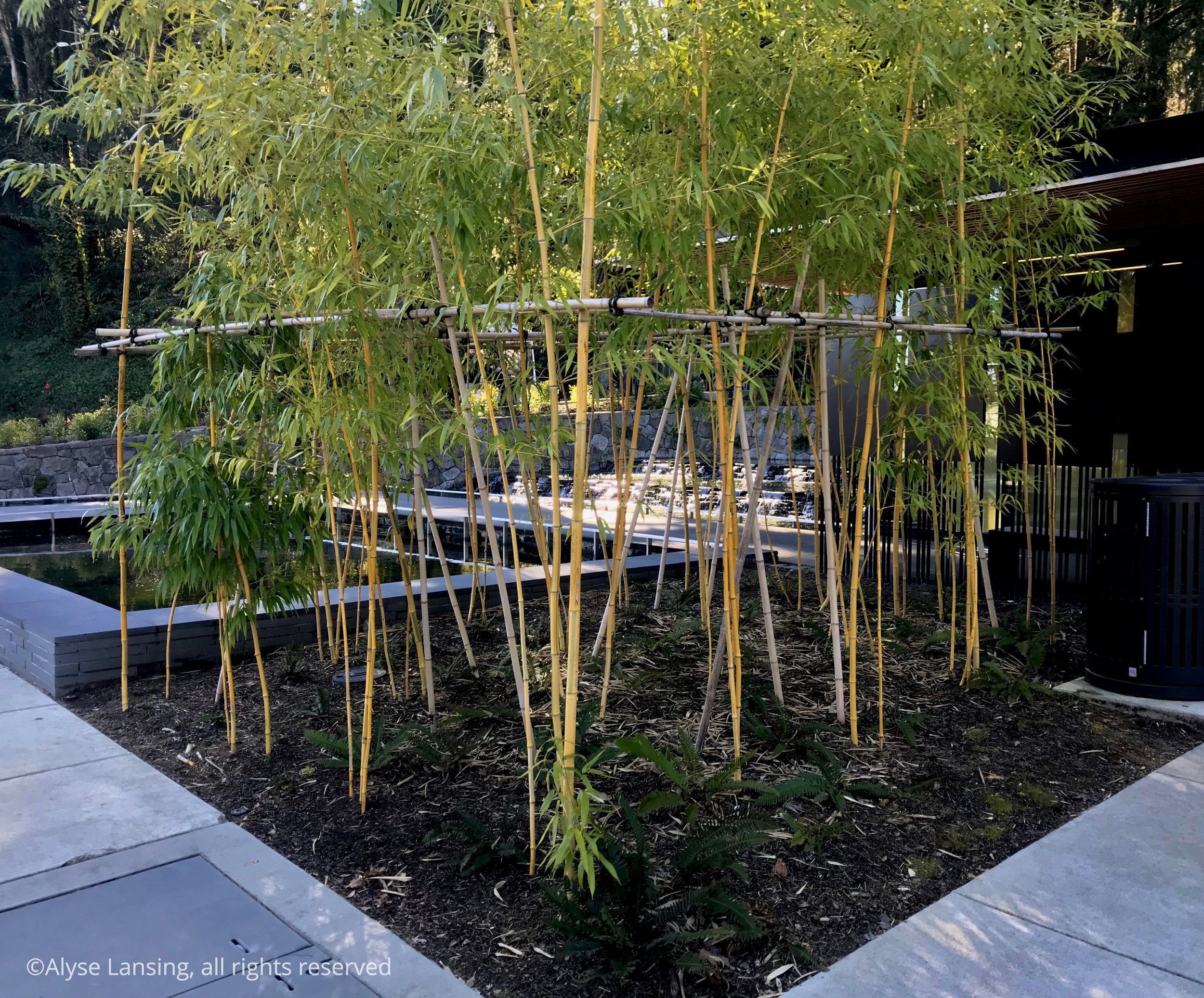 "Entry garden bamboo. Design elements: color and tone contrasts; use of horizontal and vertical lines; proportion and scale of each element in relation to each other—and in relation to the hillside forest behind it. Everything ""feels right."""