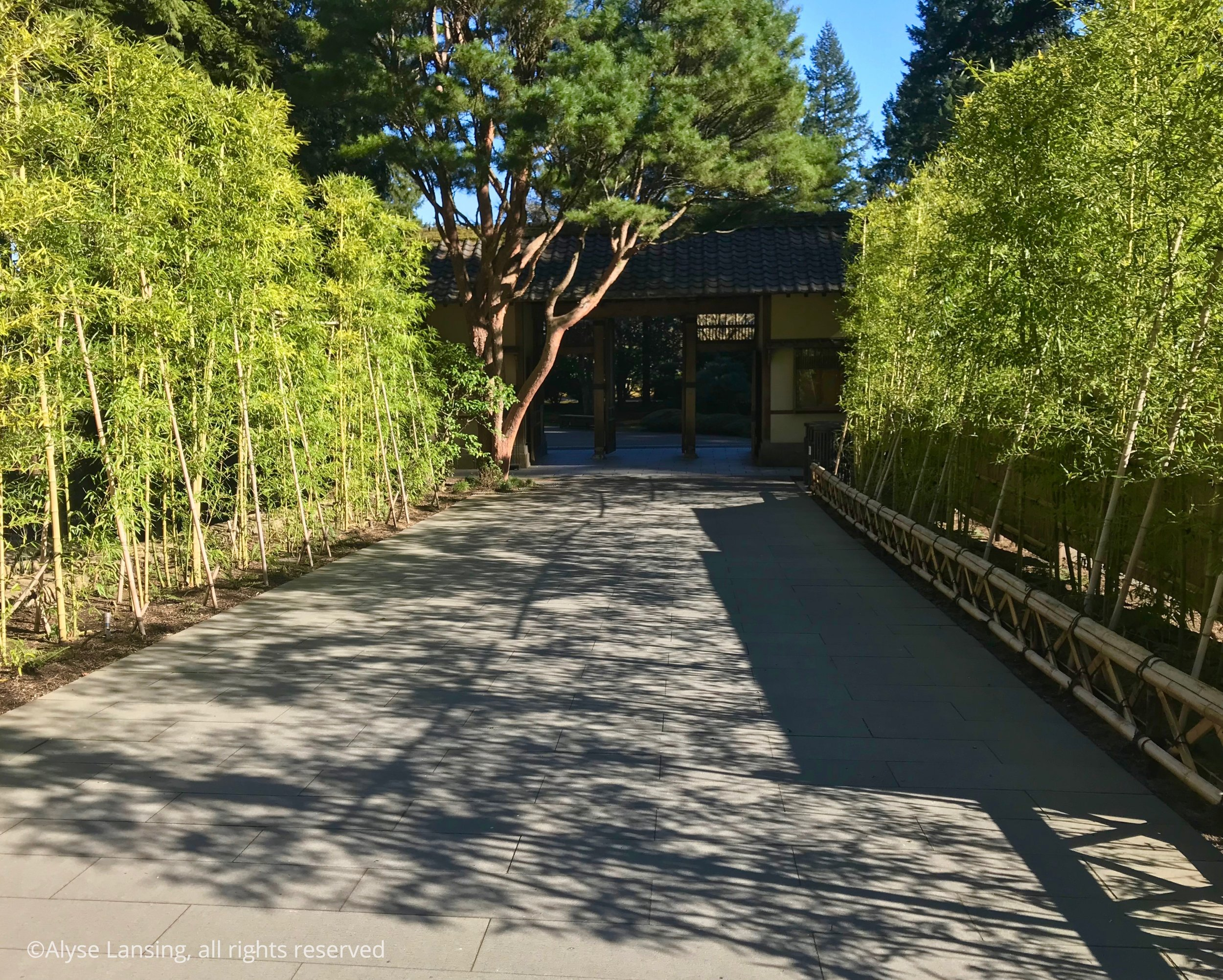 Main garden gate is straight ahead—the old admissions booth. Note the finely pruned red-barked pine. It may be cliche, but it certainly draws  me  forward!