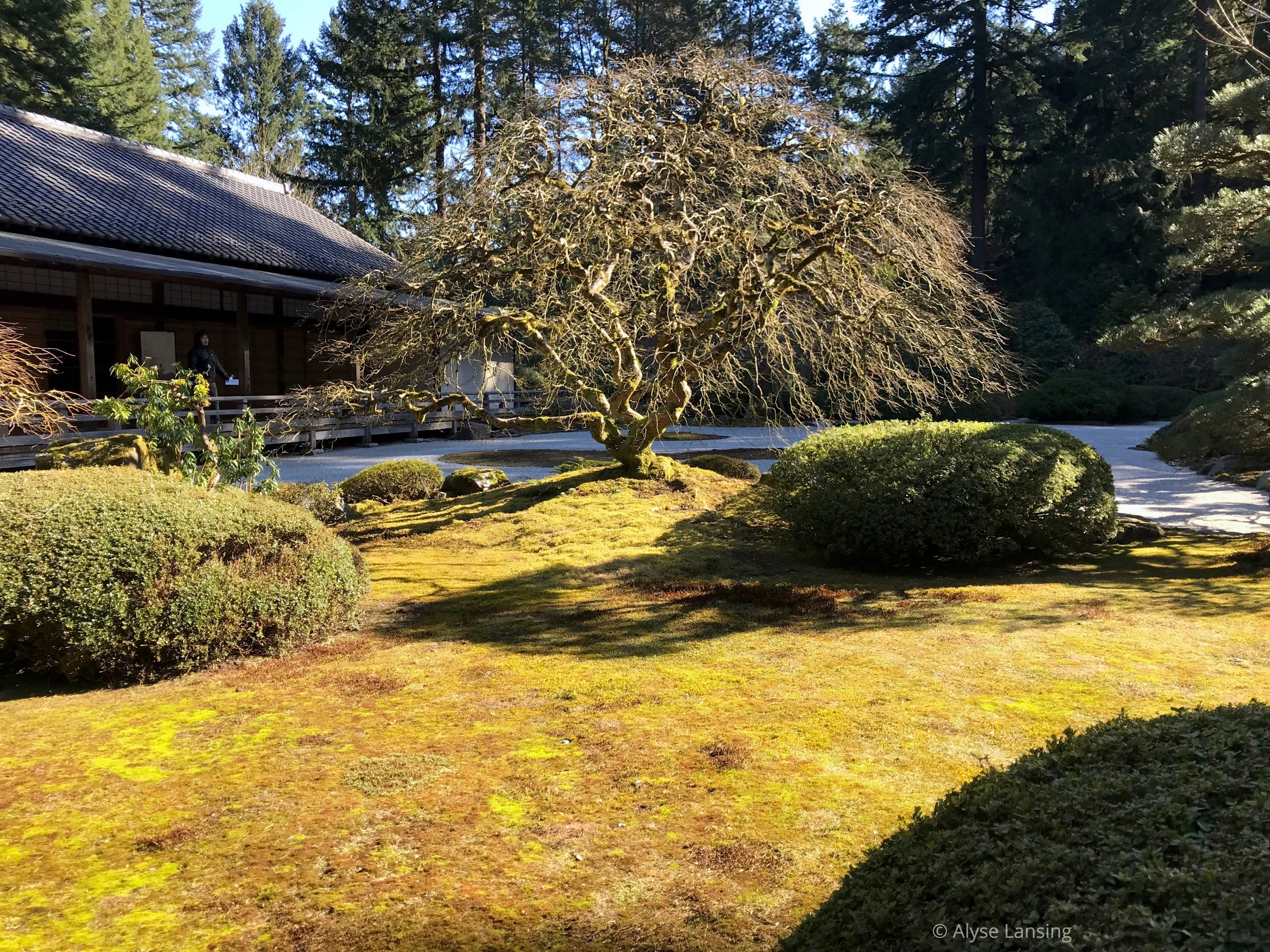 I was again struck by the shadows...and how bright the sun was upon the moss.