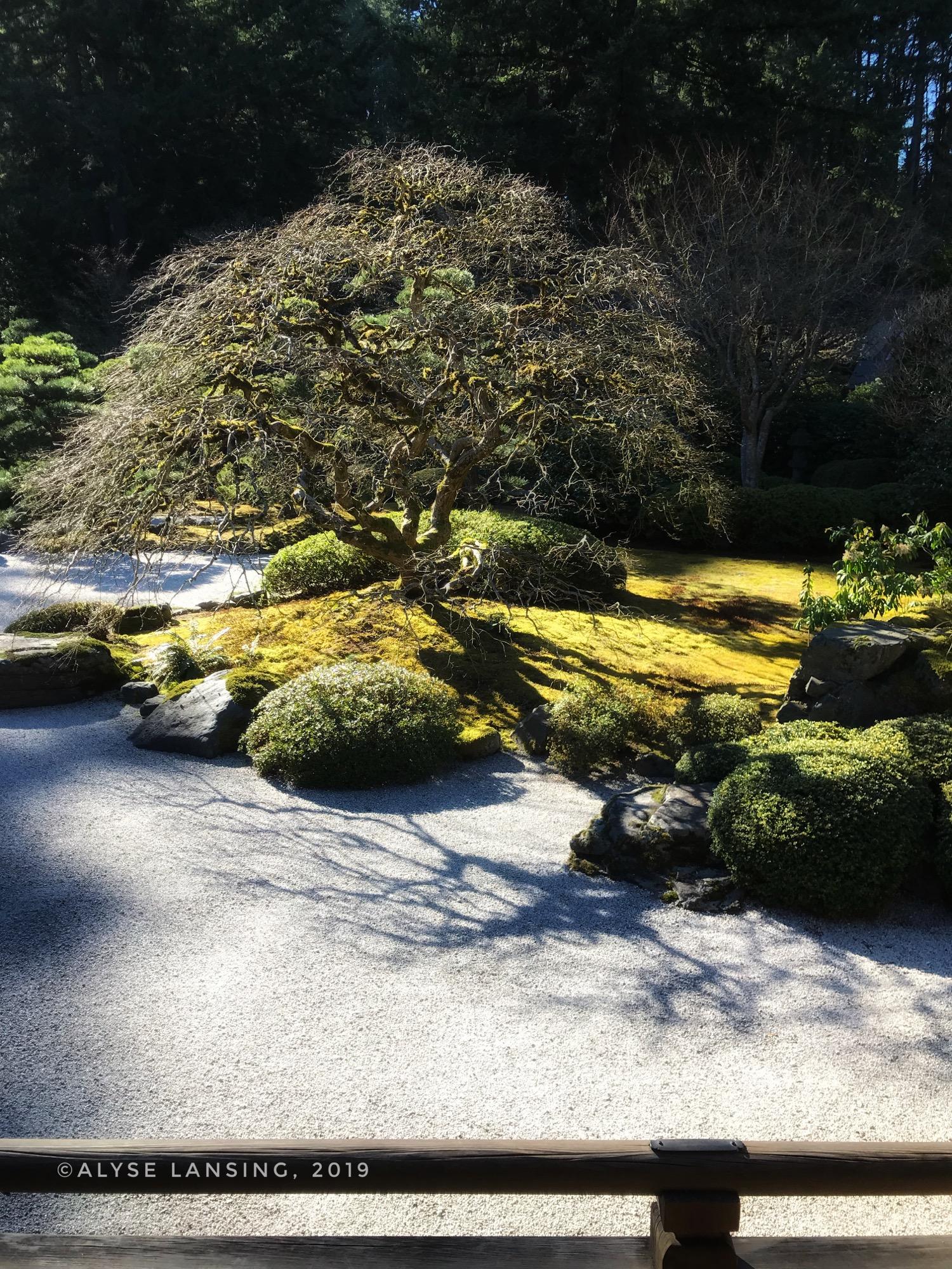 AlyseLansing_JapaneseGardenShadows2019-03-04.jpg