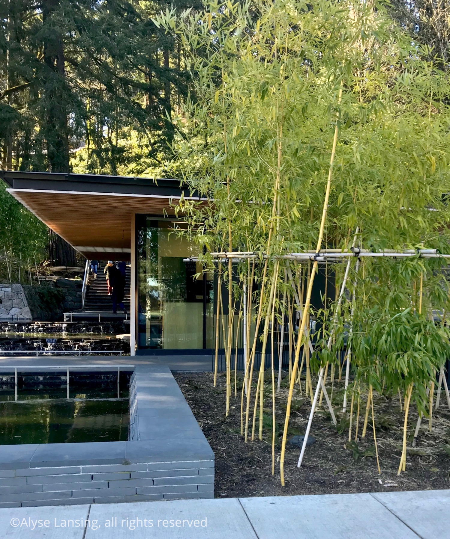 Form and line, at the entrance to the Japanese Garden.