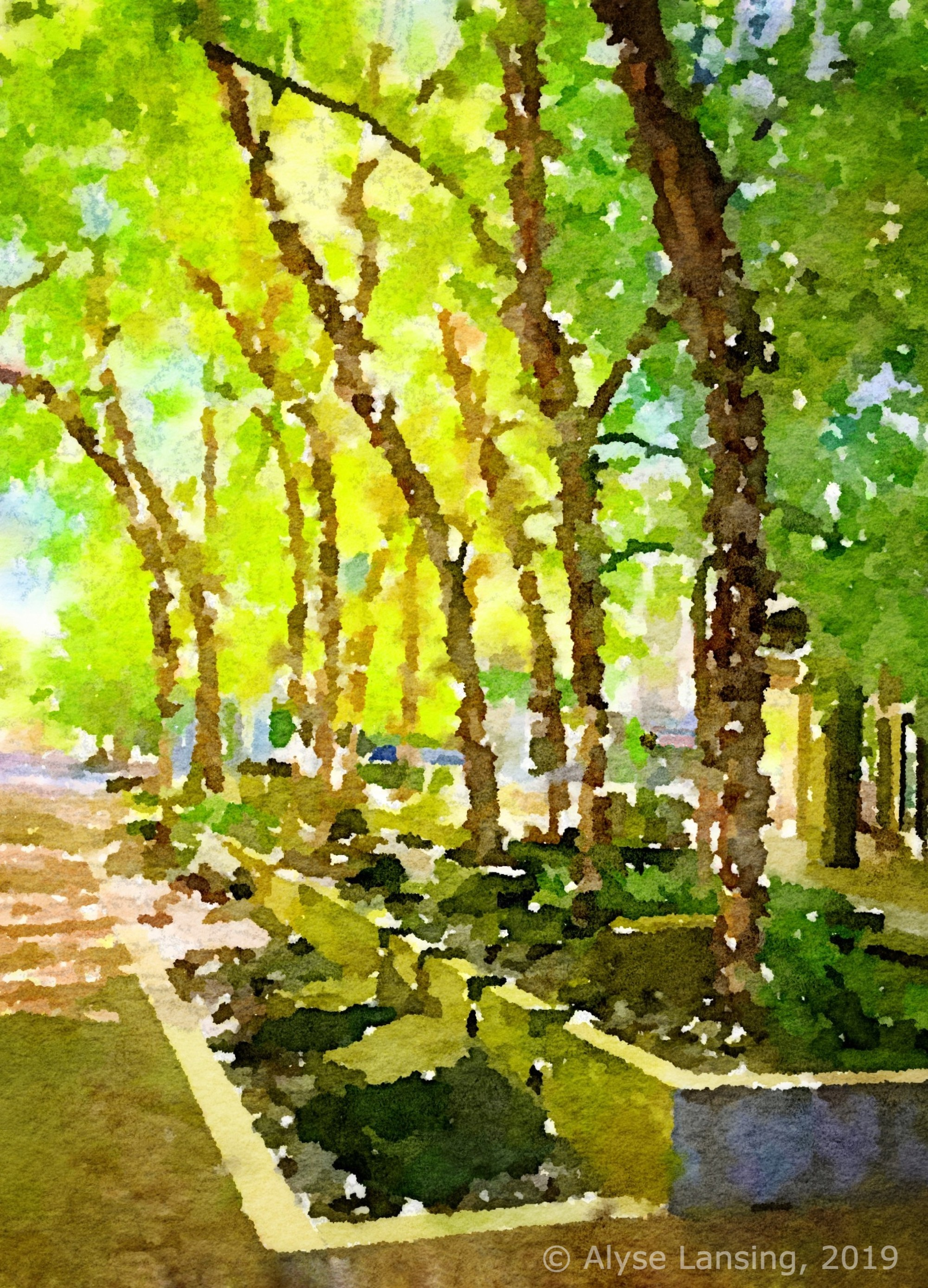Waterlogue app applied to my photograph—river birch on pedestrian-friendly Pennoyer Street, South Waterfront district, Portland.