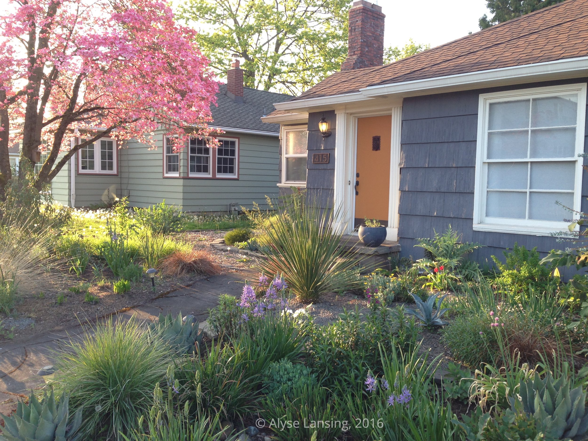Spring 2016 - The front garden as it looked when I visited 3 years ago.