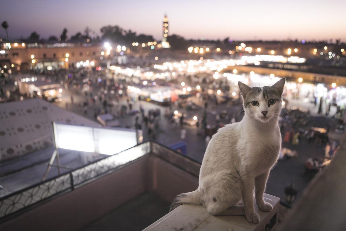 Djema El-Fna, Marrakech, Morocco