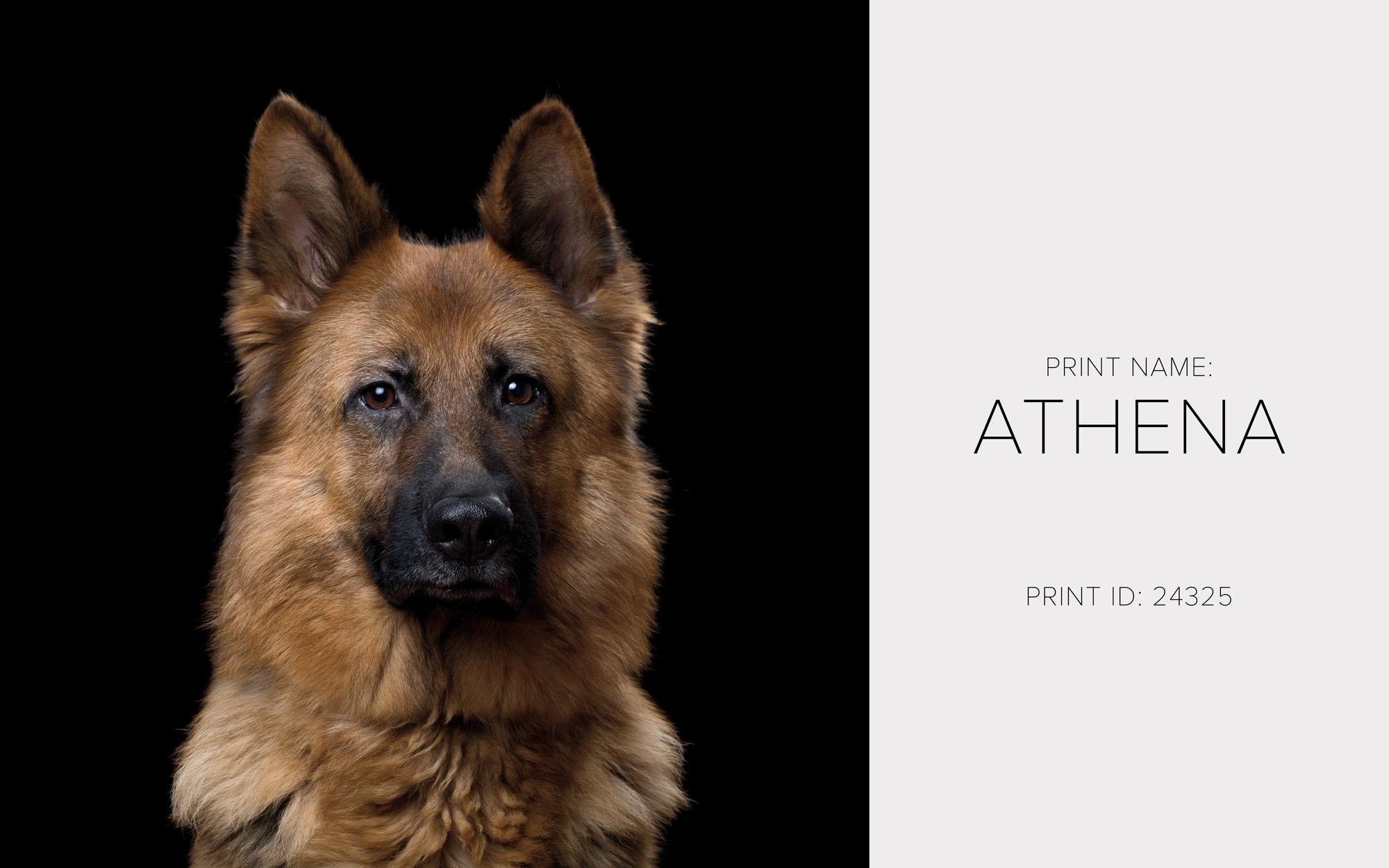 Athena_Print.jpg