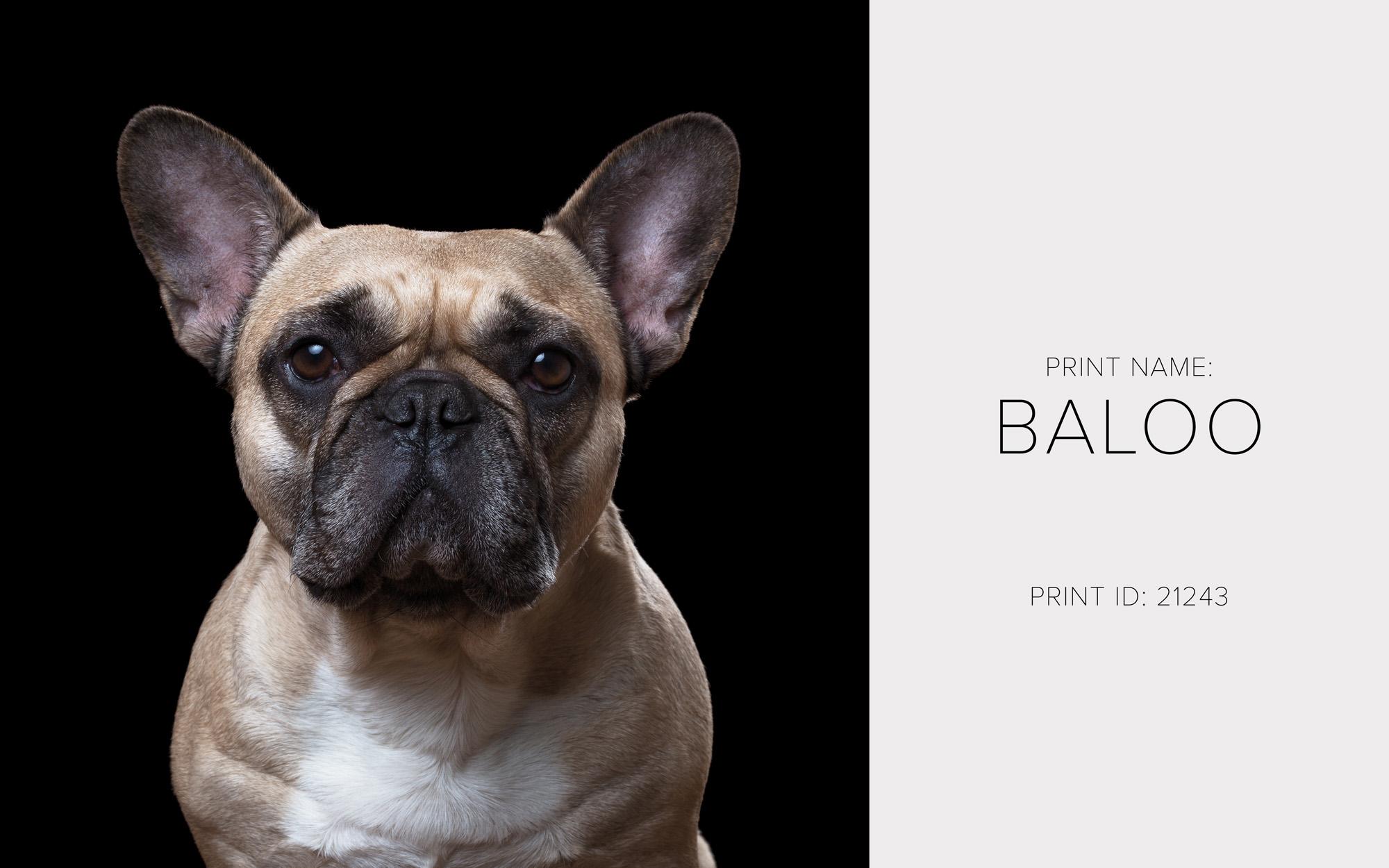 Baloo_Thumb.jpg