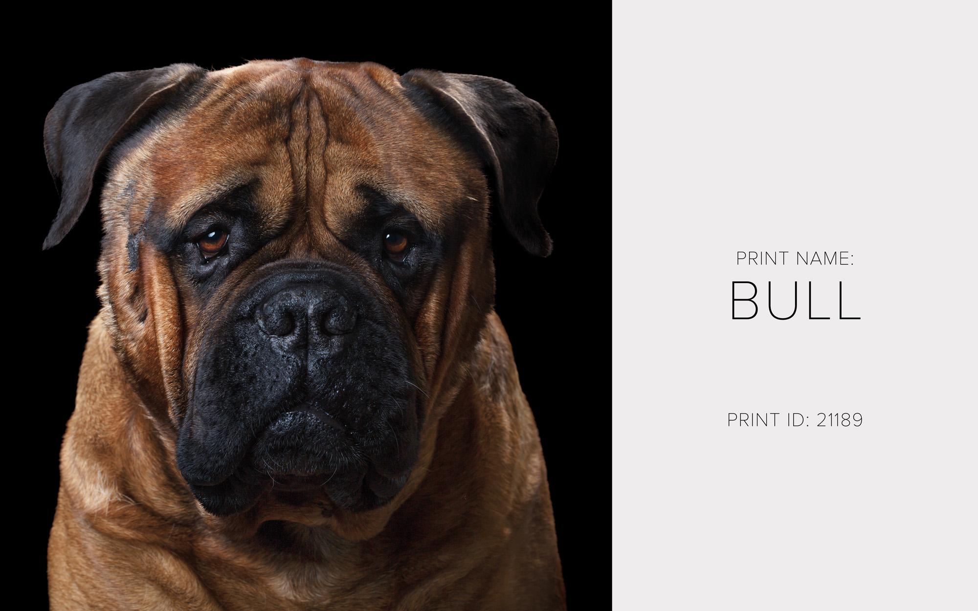 Bull_Print.jpg