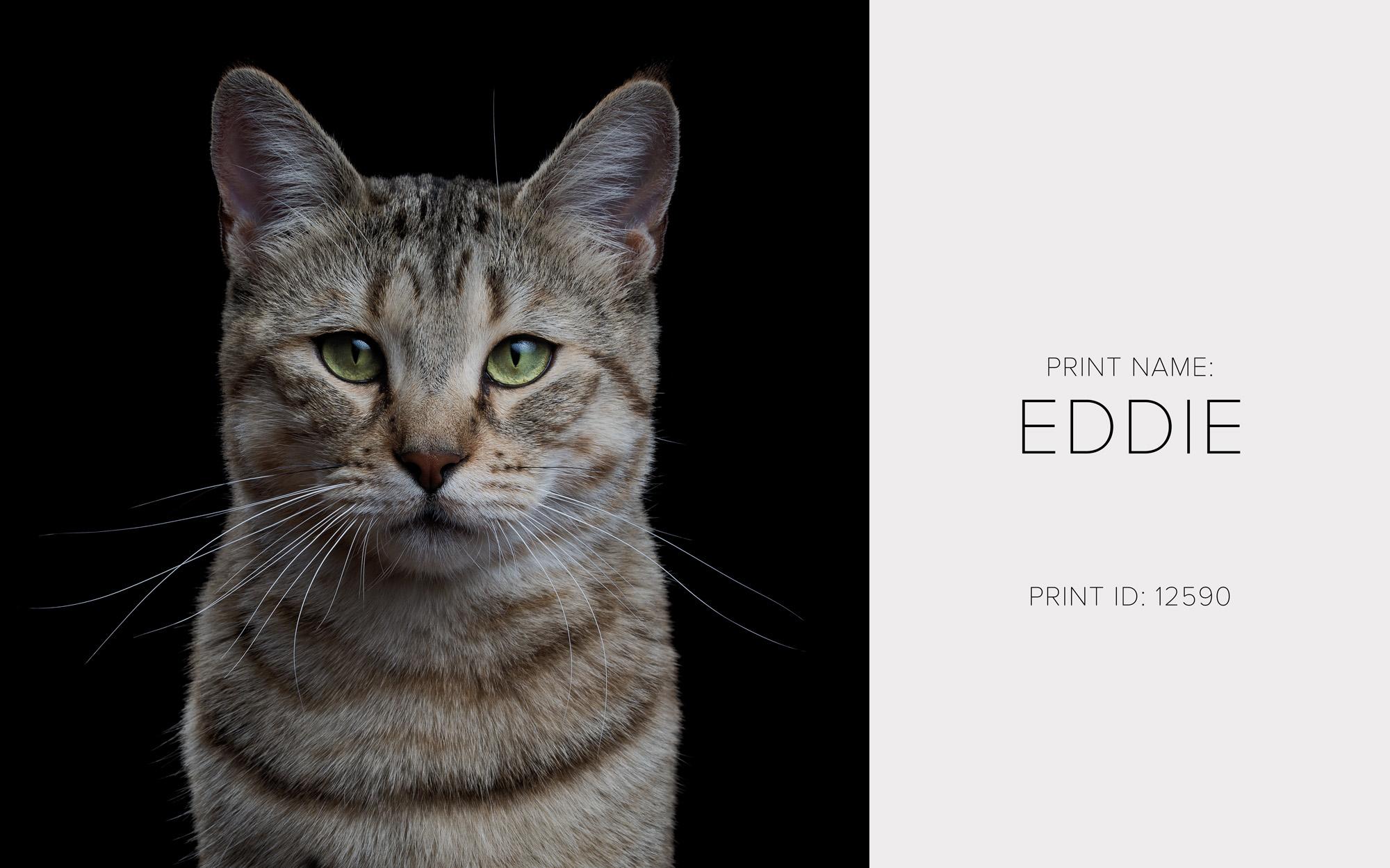 Eddie_Thumb.jpg