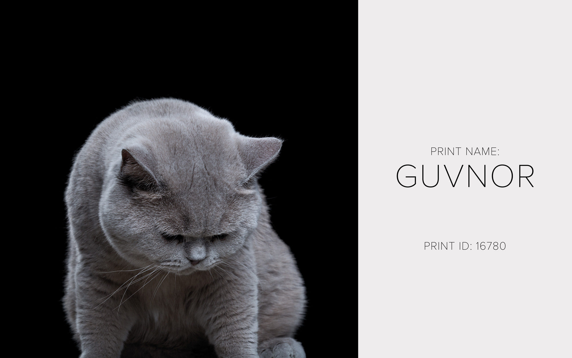 Guvnor_Thumb.jpg