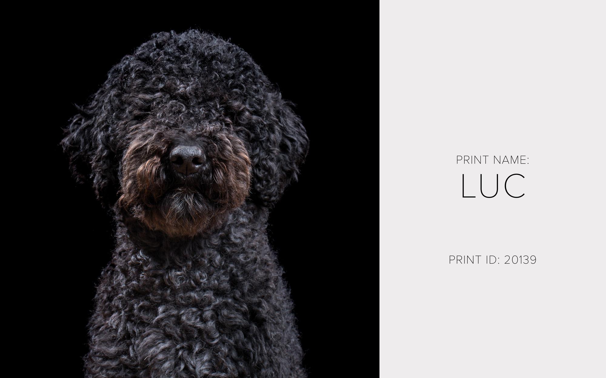 Luc_Print.jpg