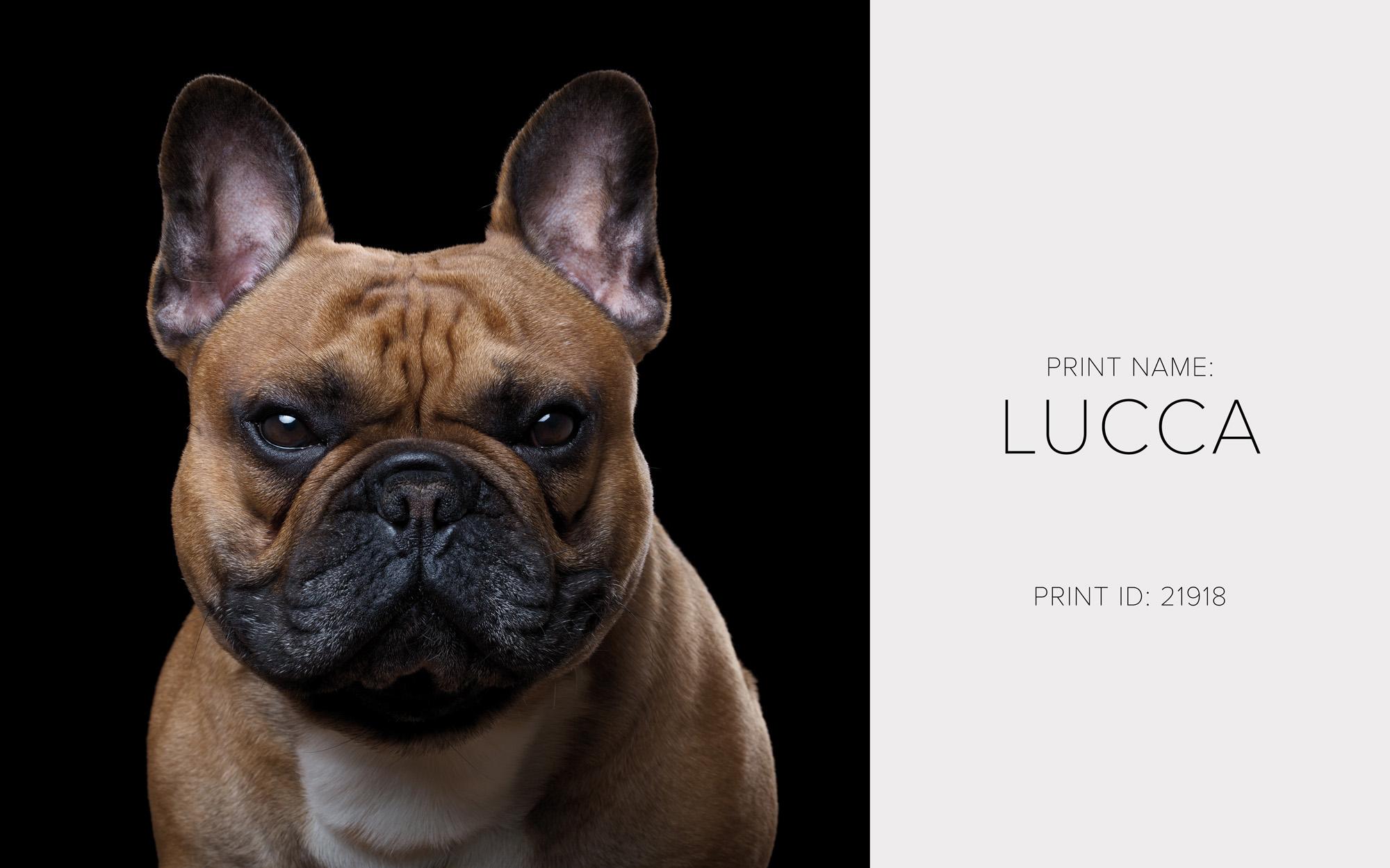 Lucca_Thumb.jpg