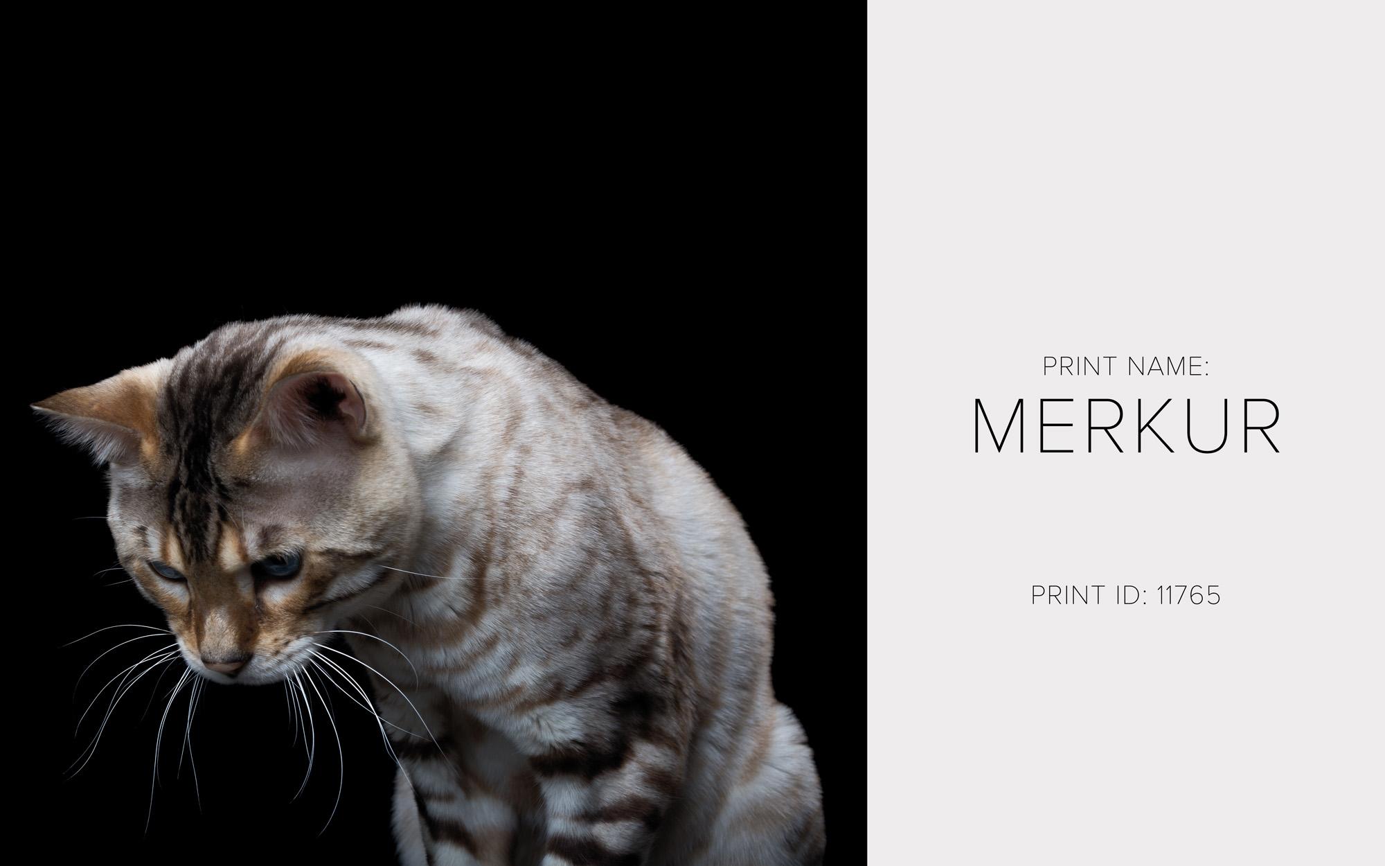 Merkur_Thumb.jpg