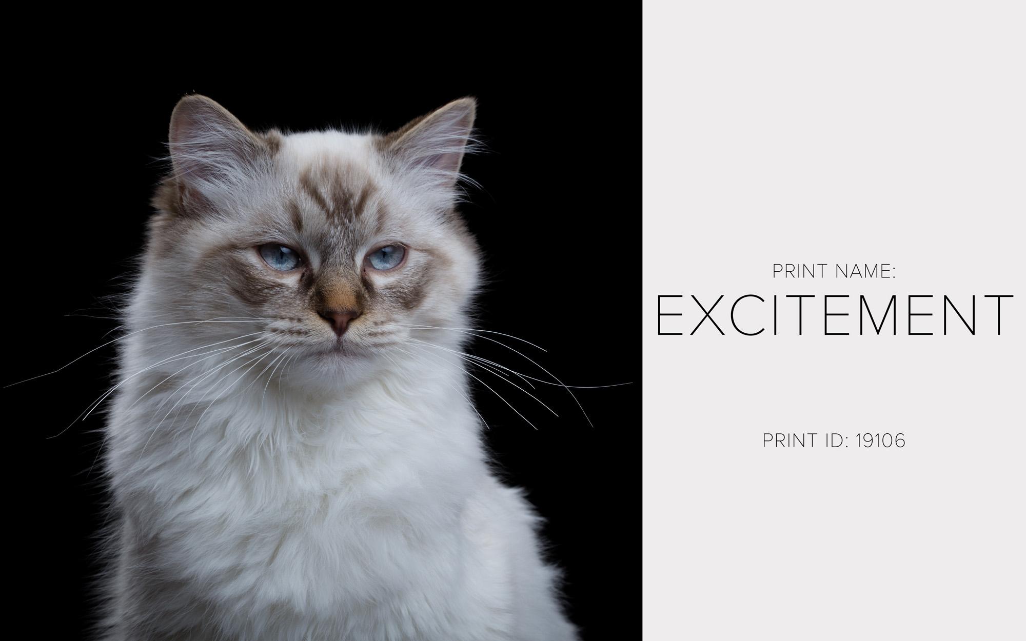Excitement_Thumb.jpg