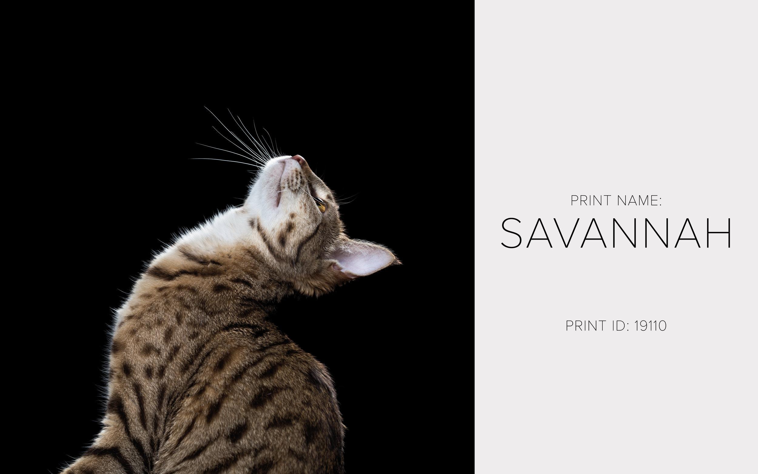 Savannah_Thumb.jpg