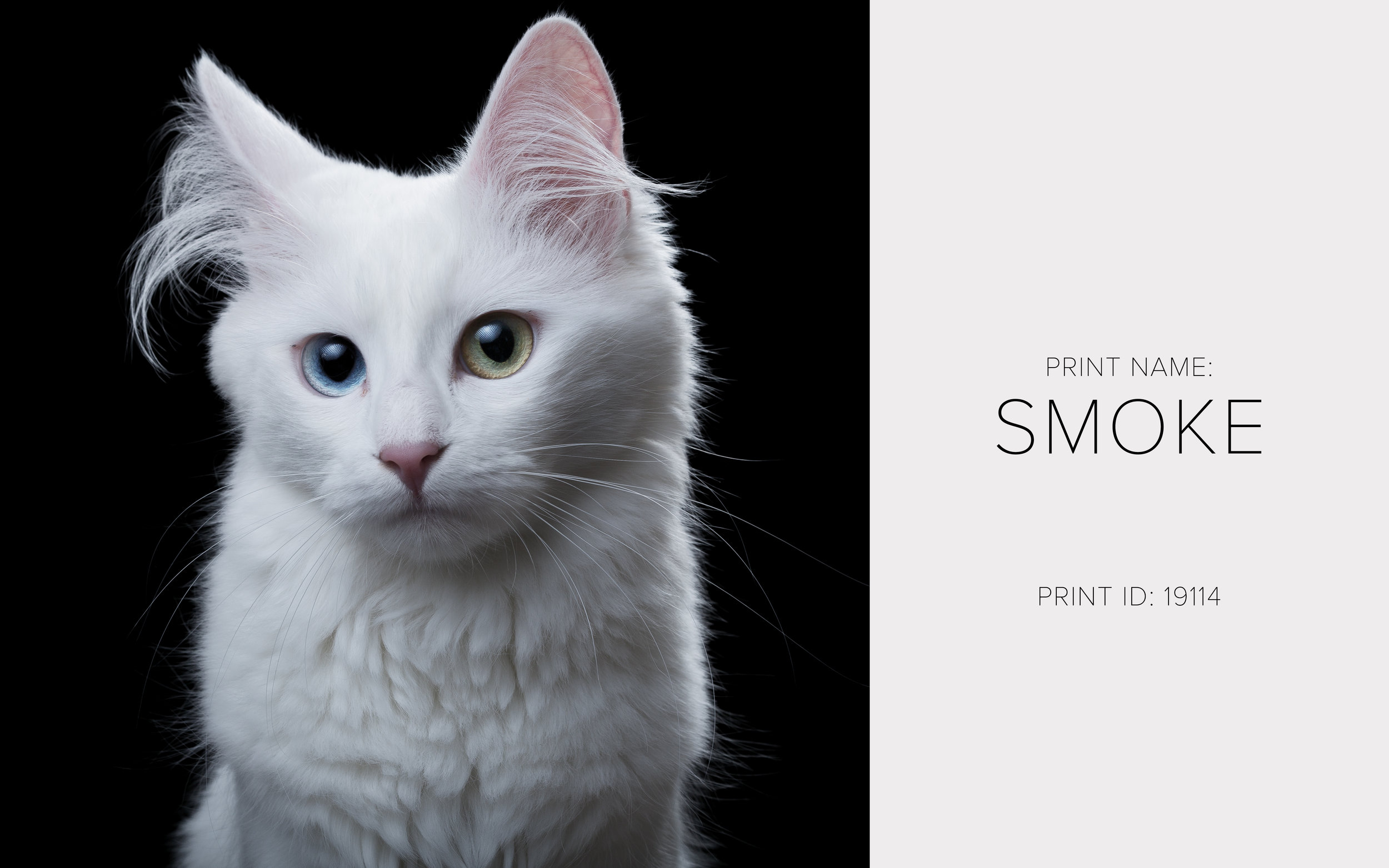 Smoke_Thumb.jpg