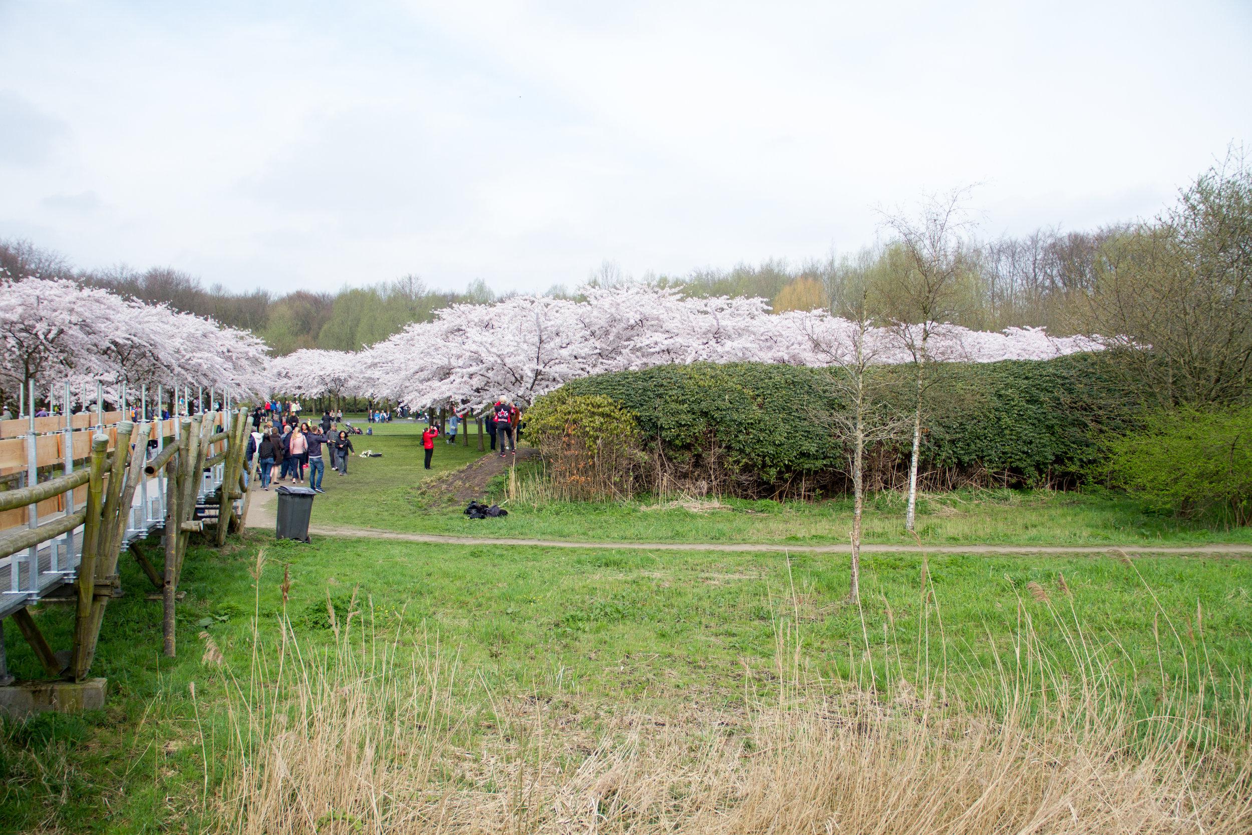 A entrada para o Kersenbloesenpark, o parque das cerejeiras.