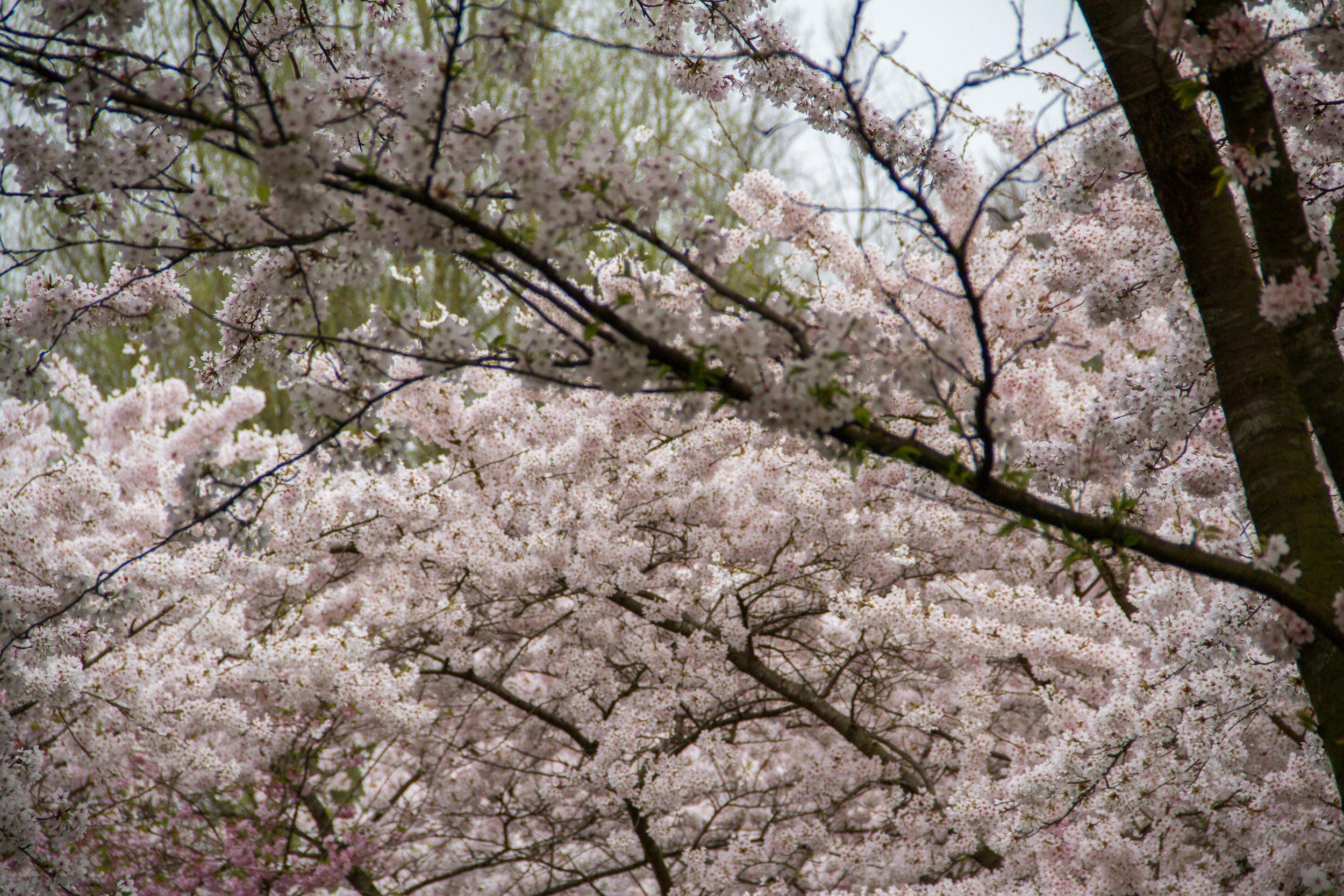 As florzinhas de pertinho, tão delicadas!