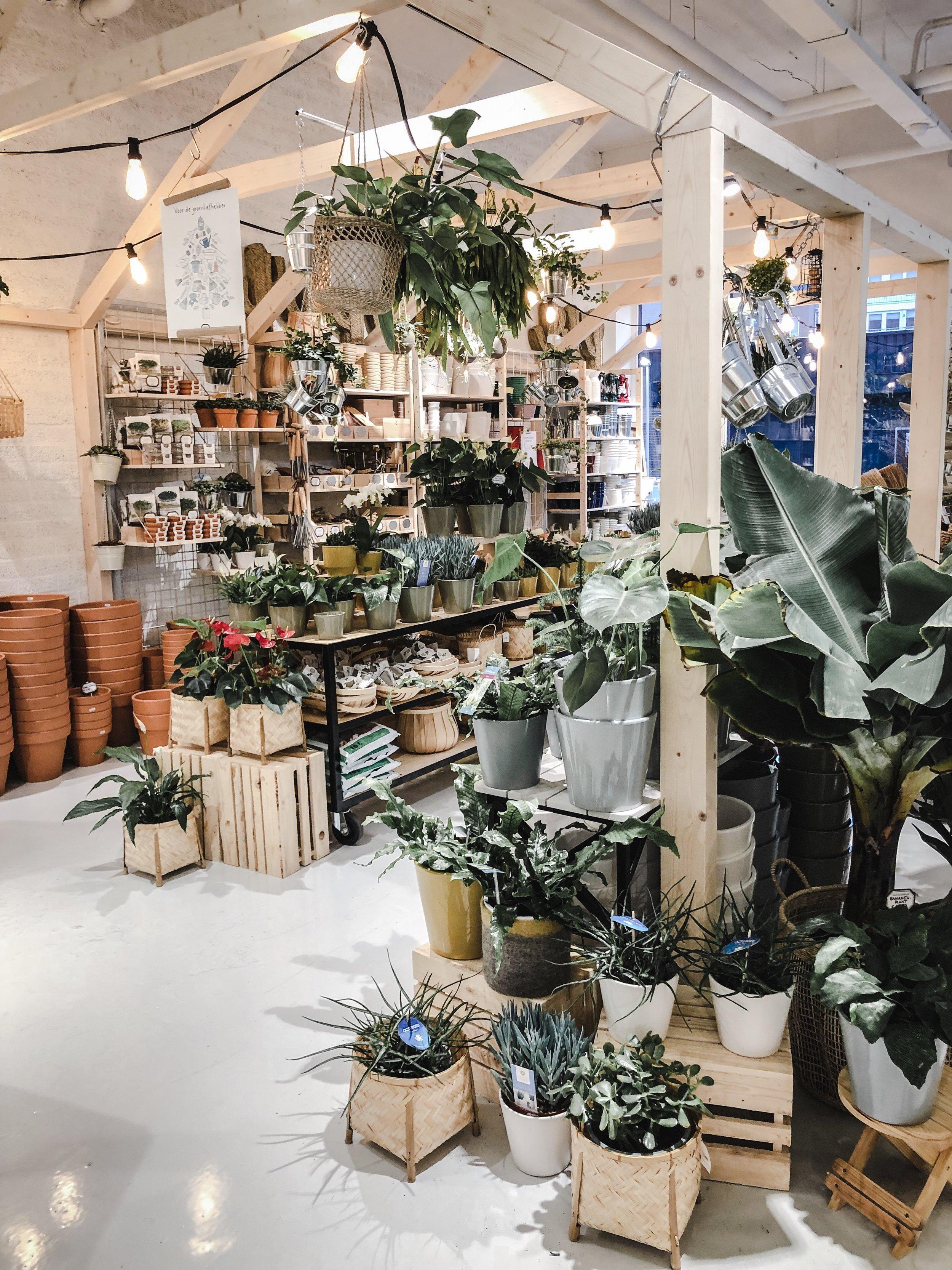 plantas DK