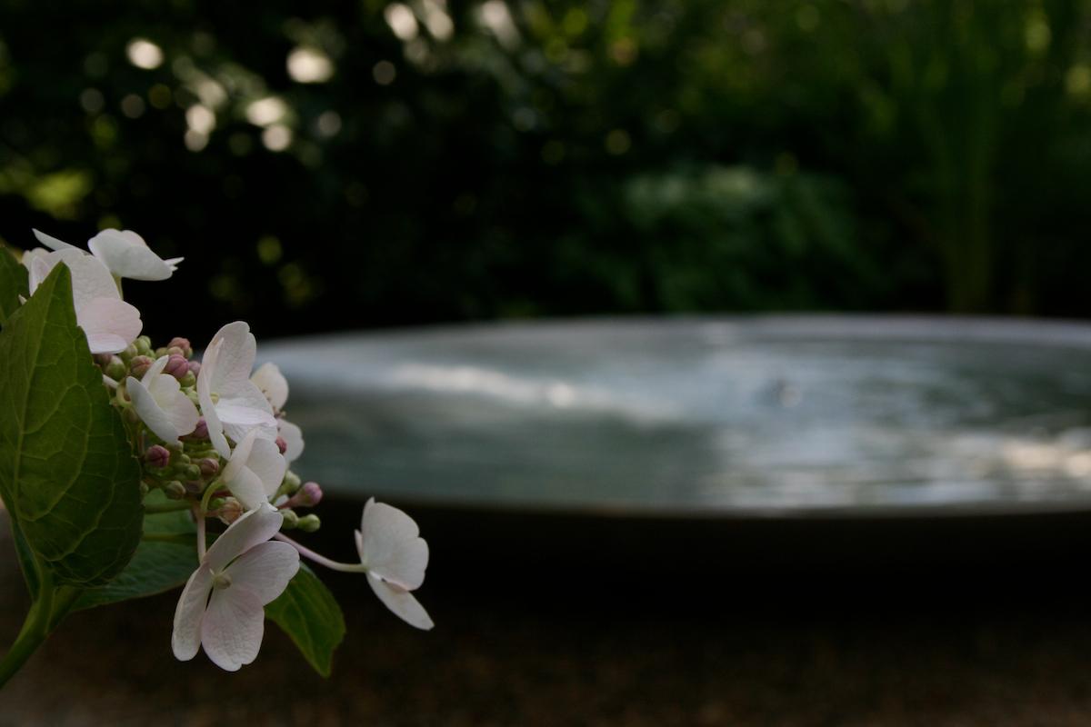 Hortensie-Wasserbecken.jpg