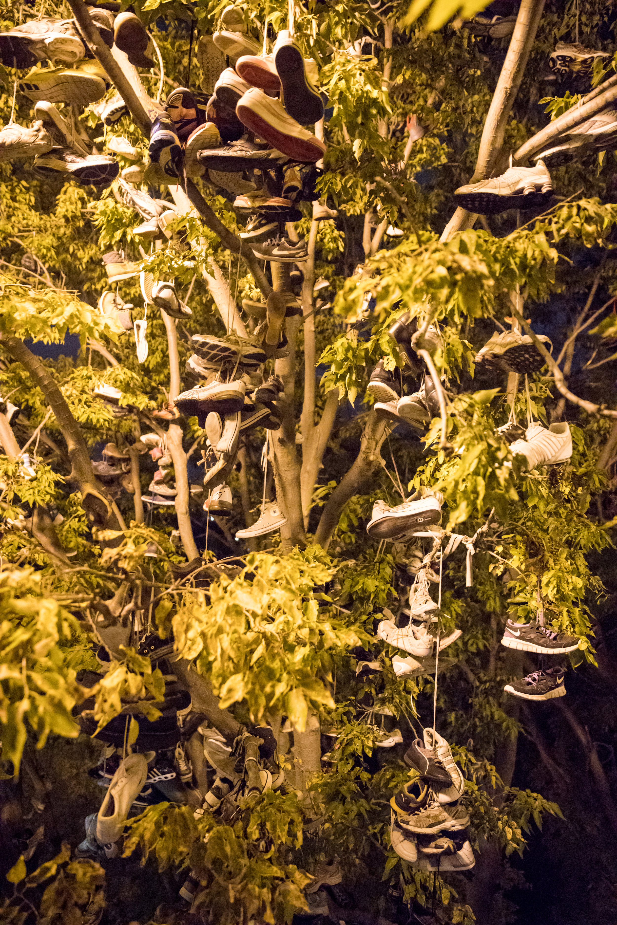 shoe tree (small).jpg