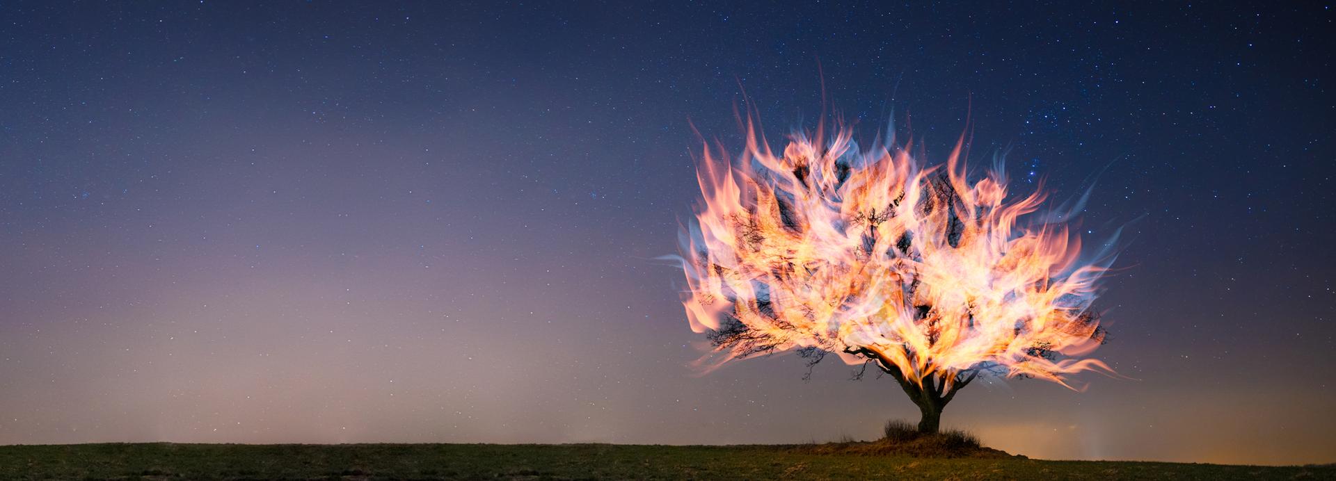 Burning Bush.jpg