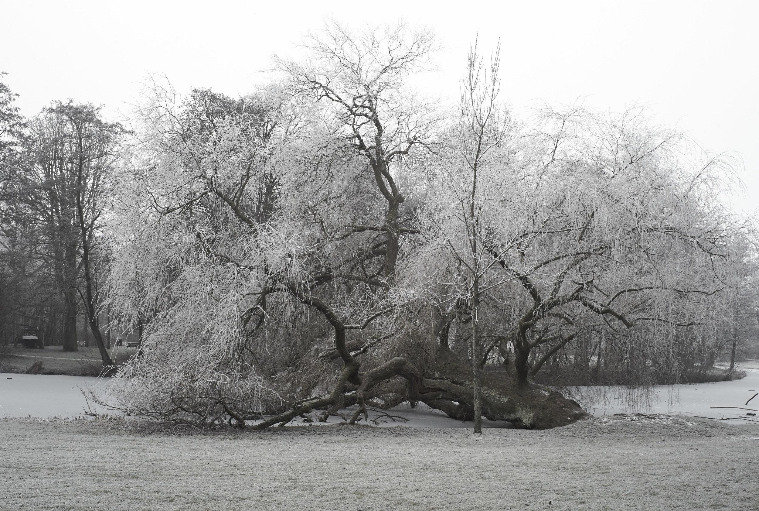 Winter Jan 2017 4.jpg