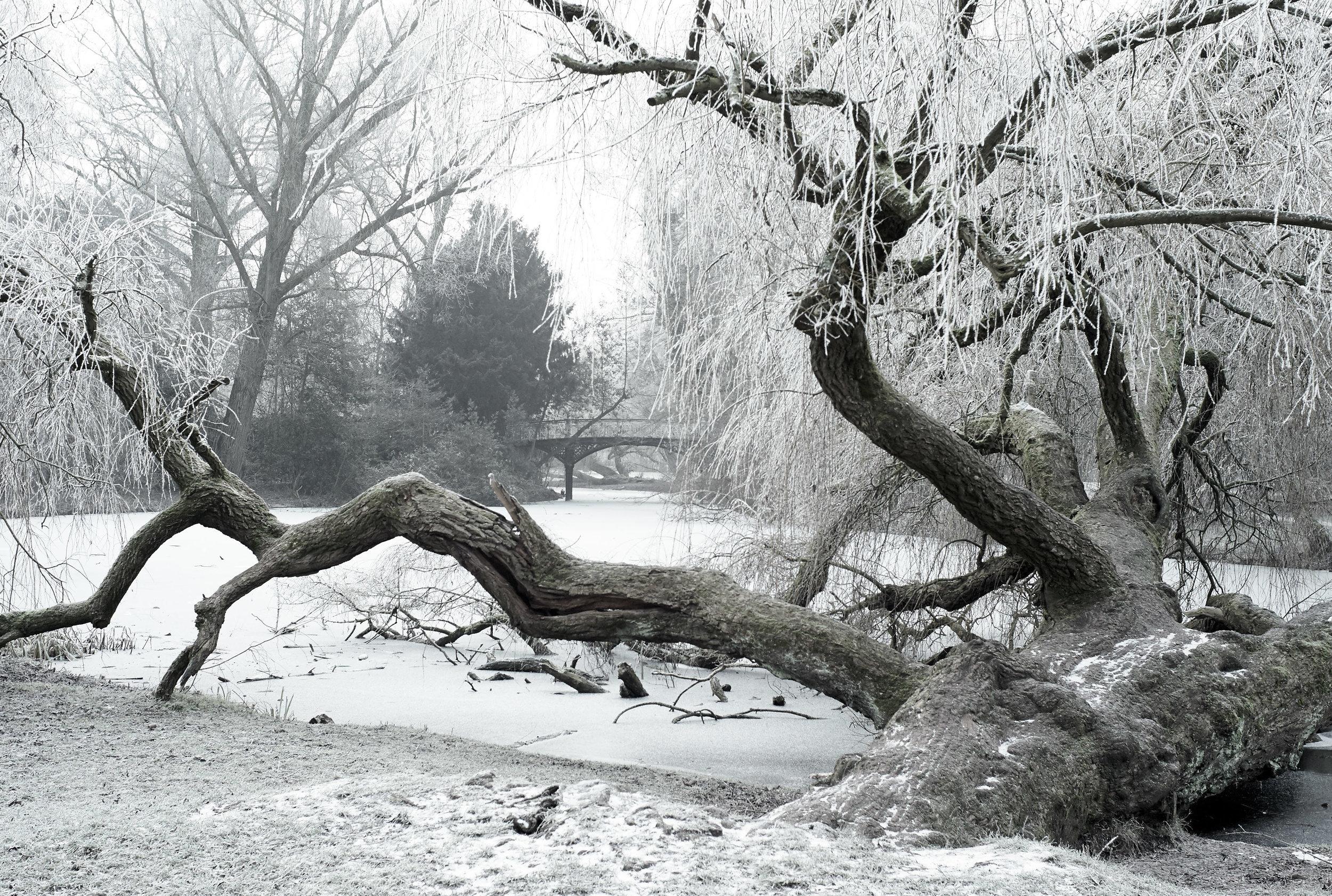 Winter Jan 2017 5.jpg