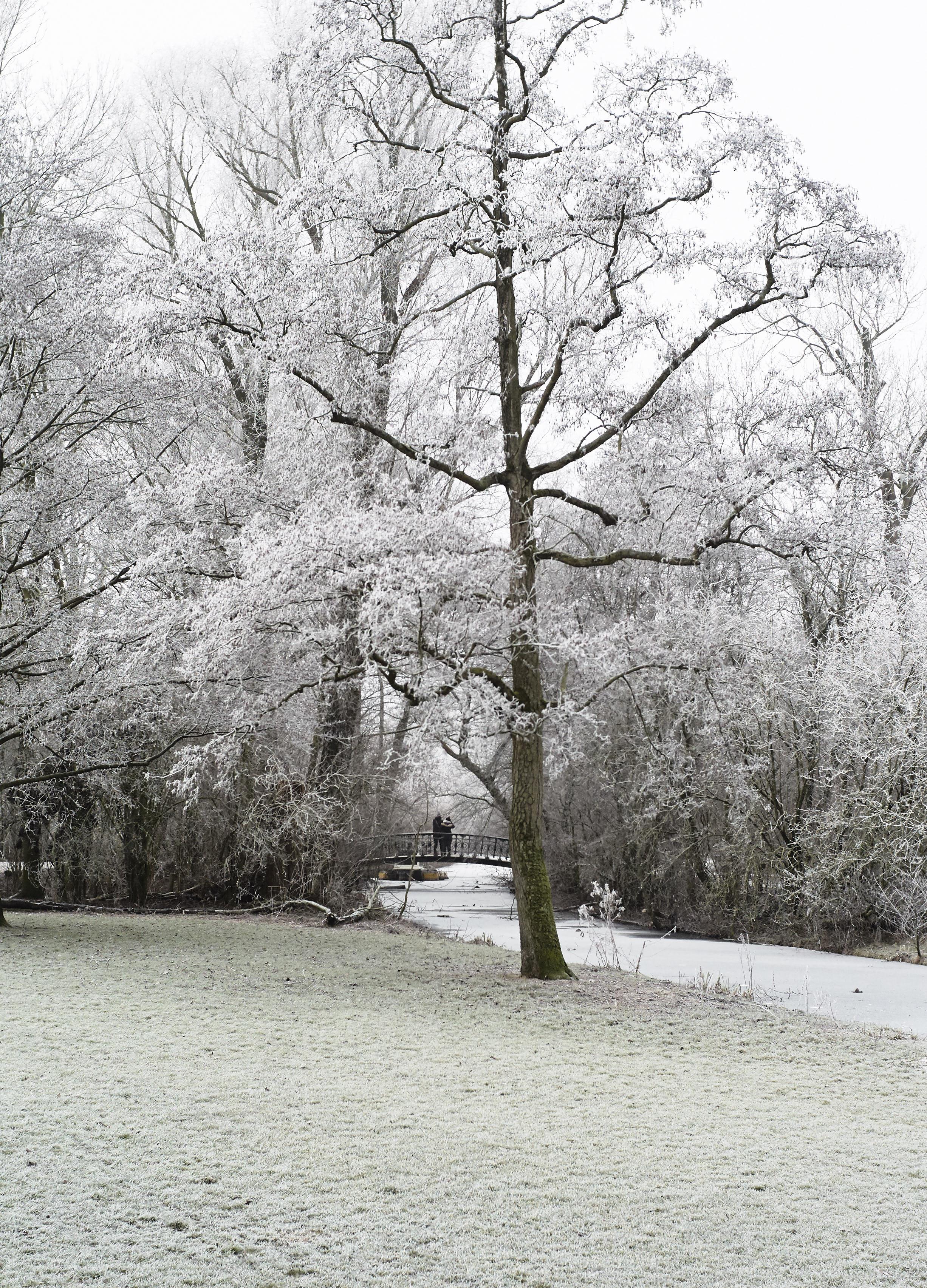 Winter Jan 2017 1.jpg