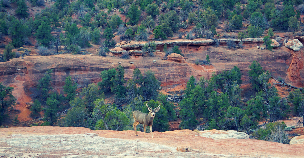 Delight rippled through our group...when a large buck turned his antlered head toward us and held us in his gaze.