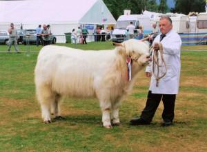 white heifer.jpg
