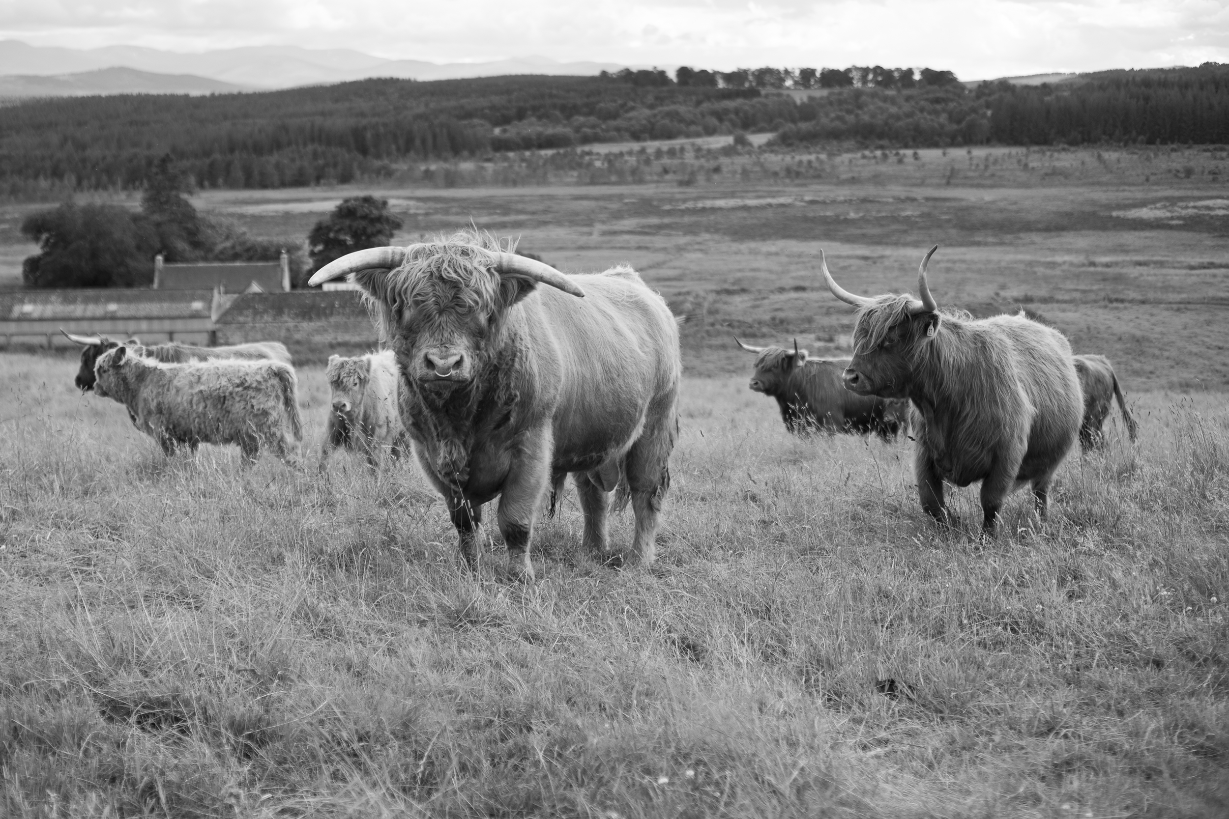 culfoich_highlanders_0016.jpg