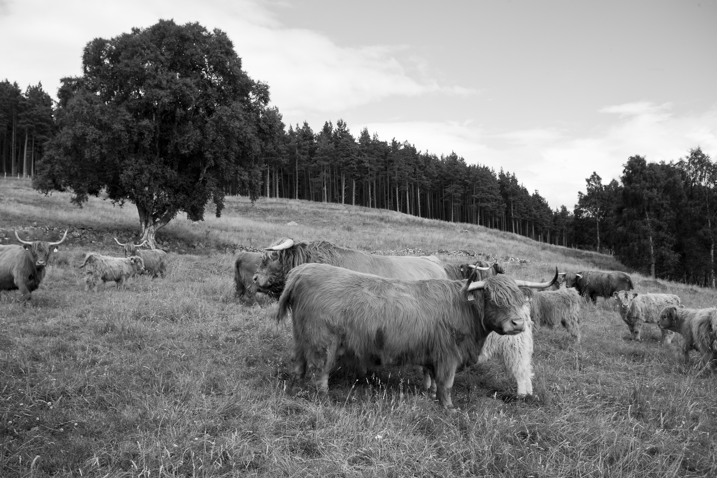 culfoich_highlanders_0064.jpg