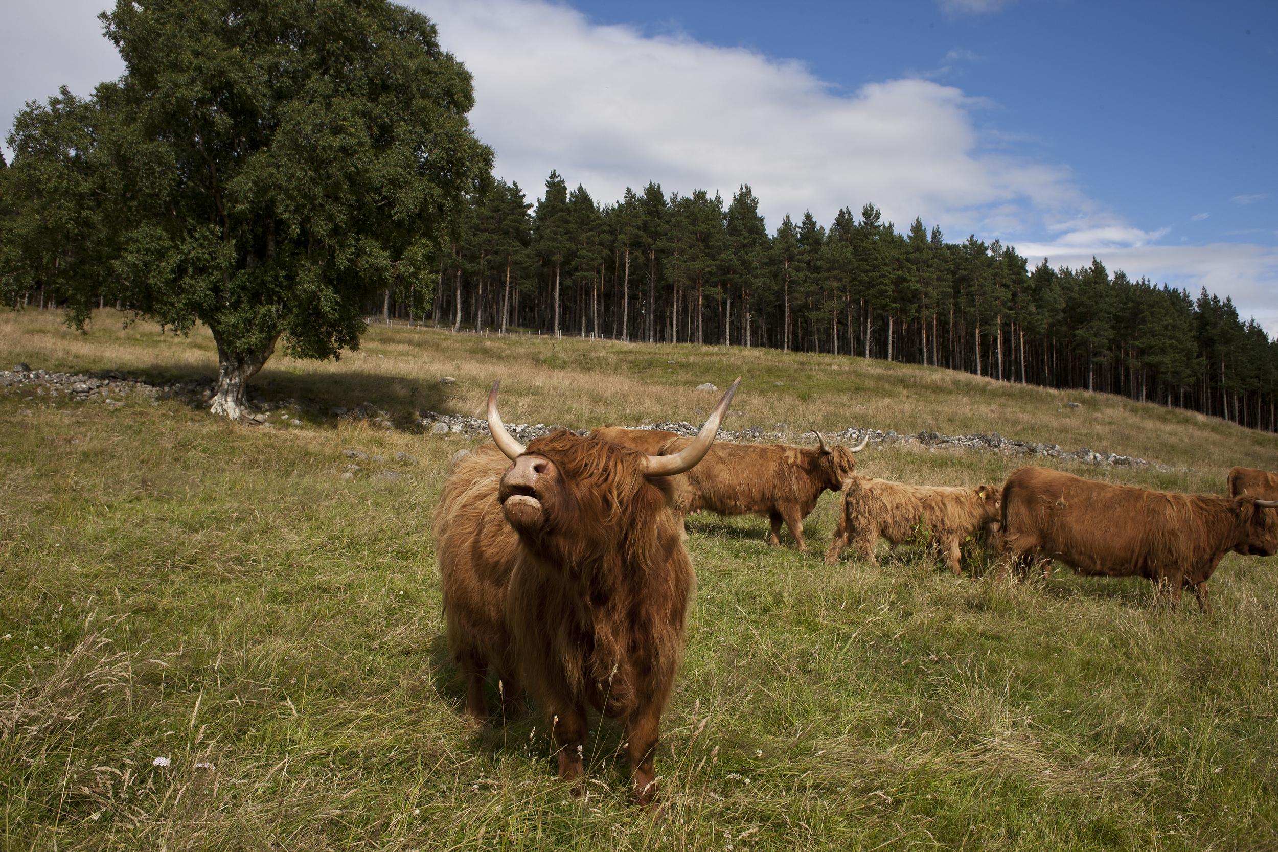 culfoich_highlanders_0082.jpg