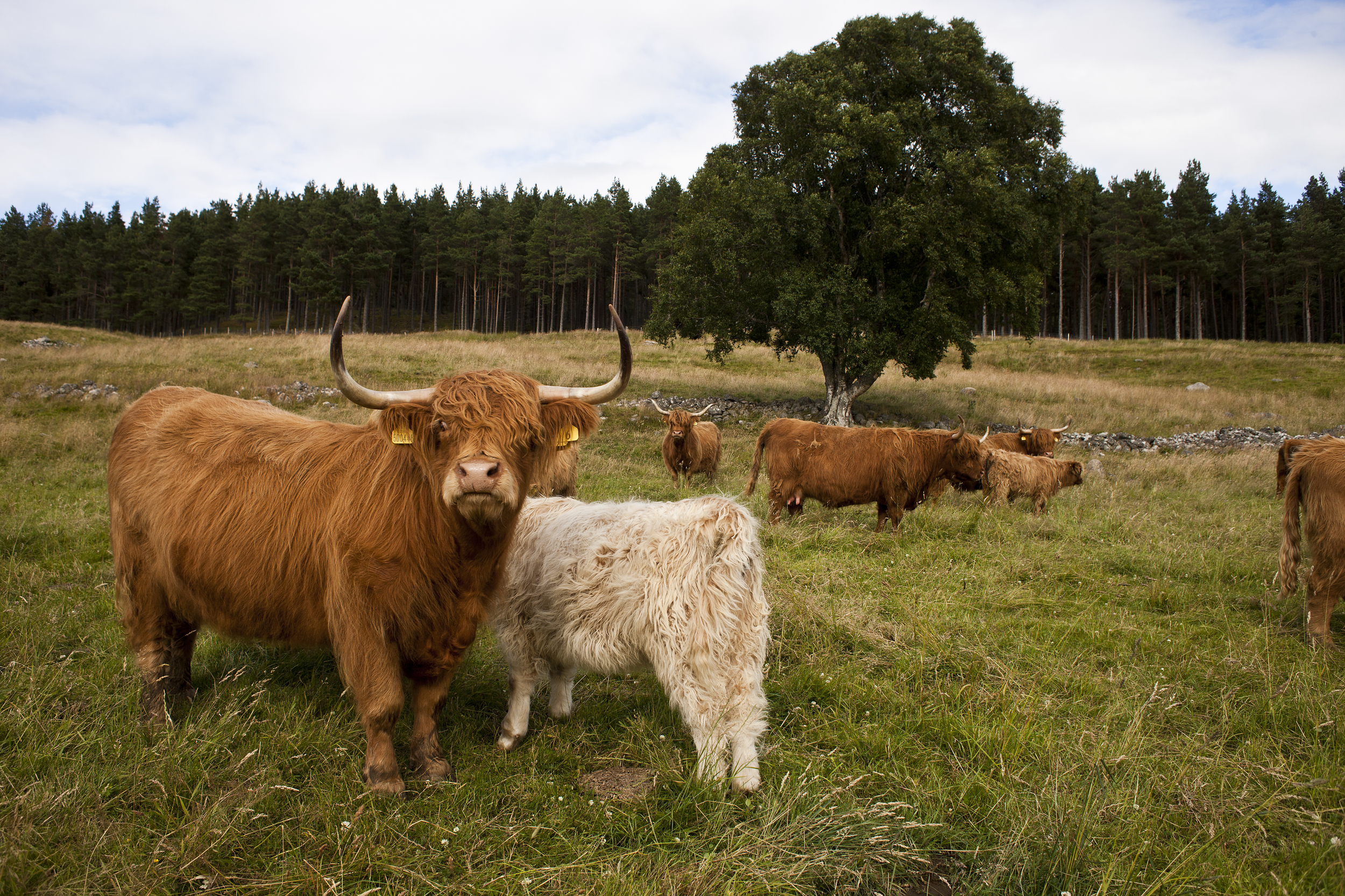 culfoich_highlanders_0072.jpg